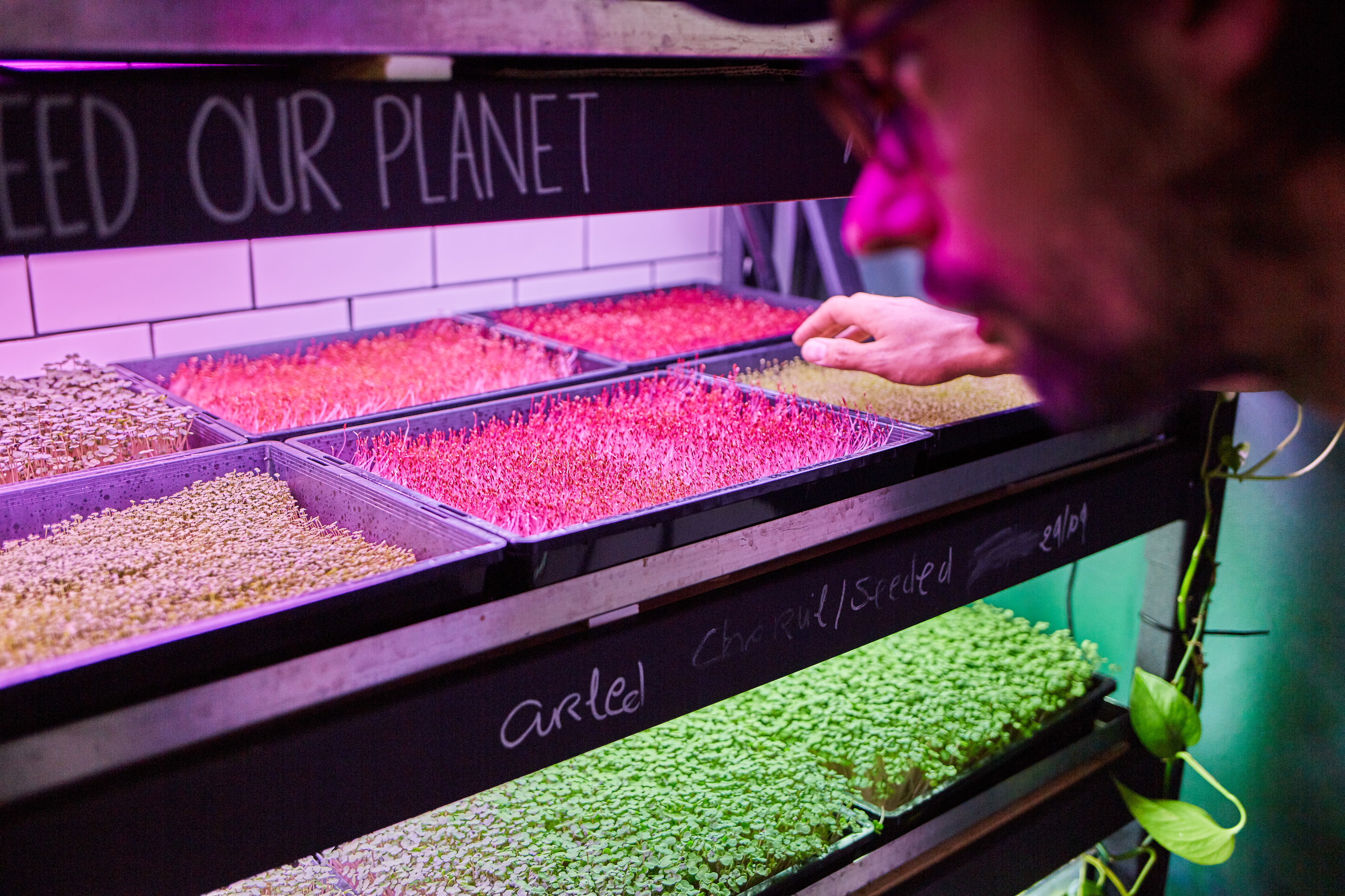 Photo: Björn Rust    Farmwall  co-founder Geert Hendrix inspects greens grown with the Alphington based start-up's aquaponic prototype.