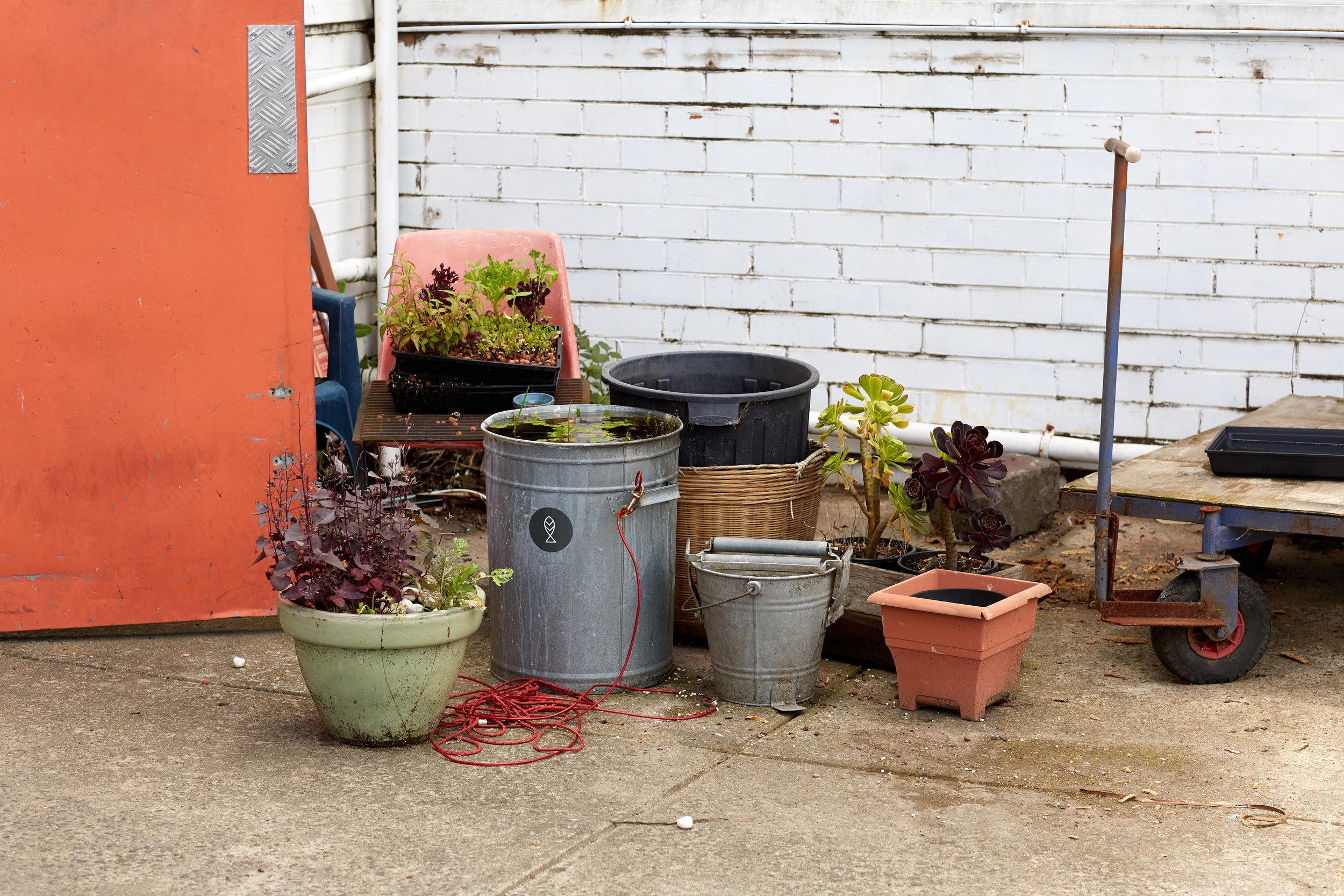 Photo: Björn Rust    Farmwall Aquaponics , Alphington, Victoria