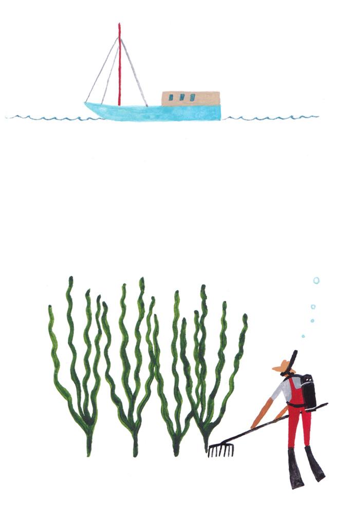 Seaweed image 8 - underwater farmer CROPPED FOR ONLINE.jpg