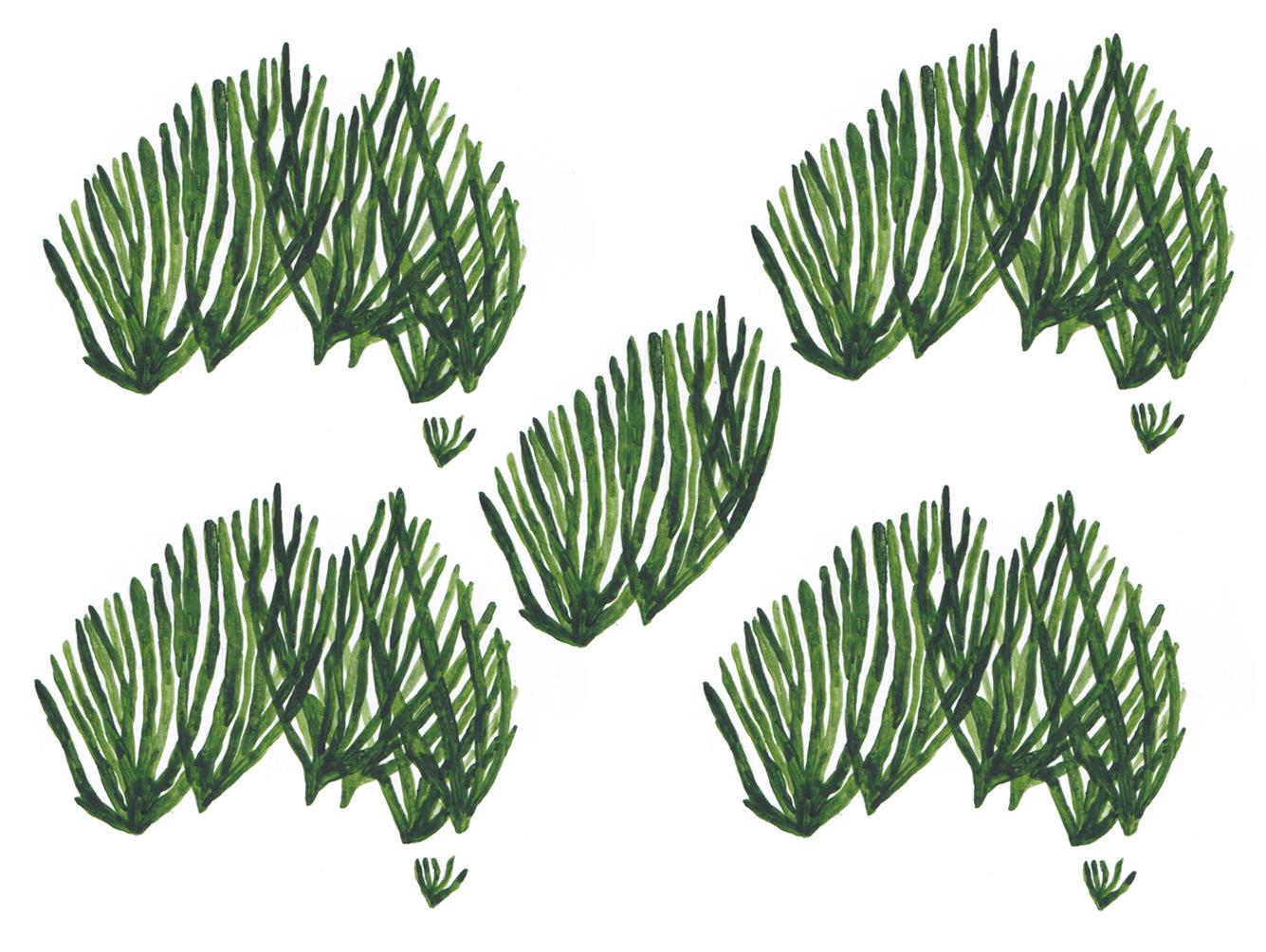 Seaweed image 6 - Australia.jpg