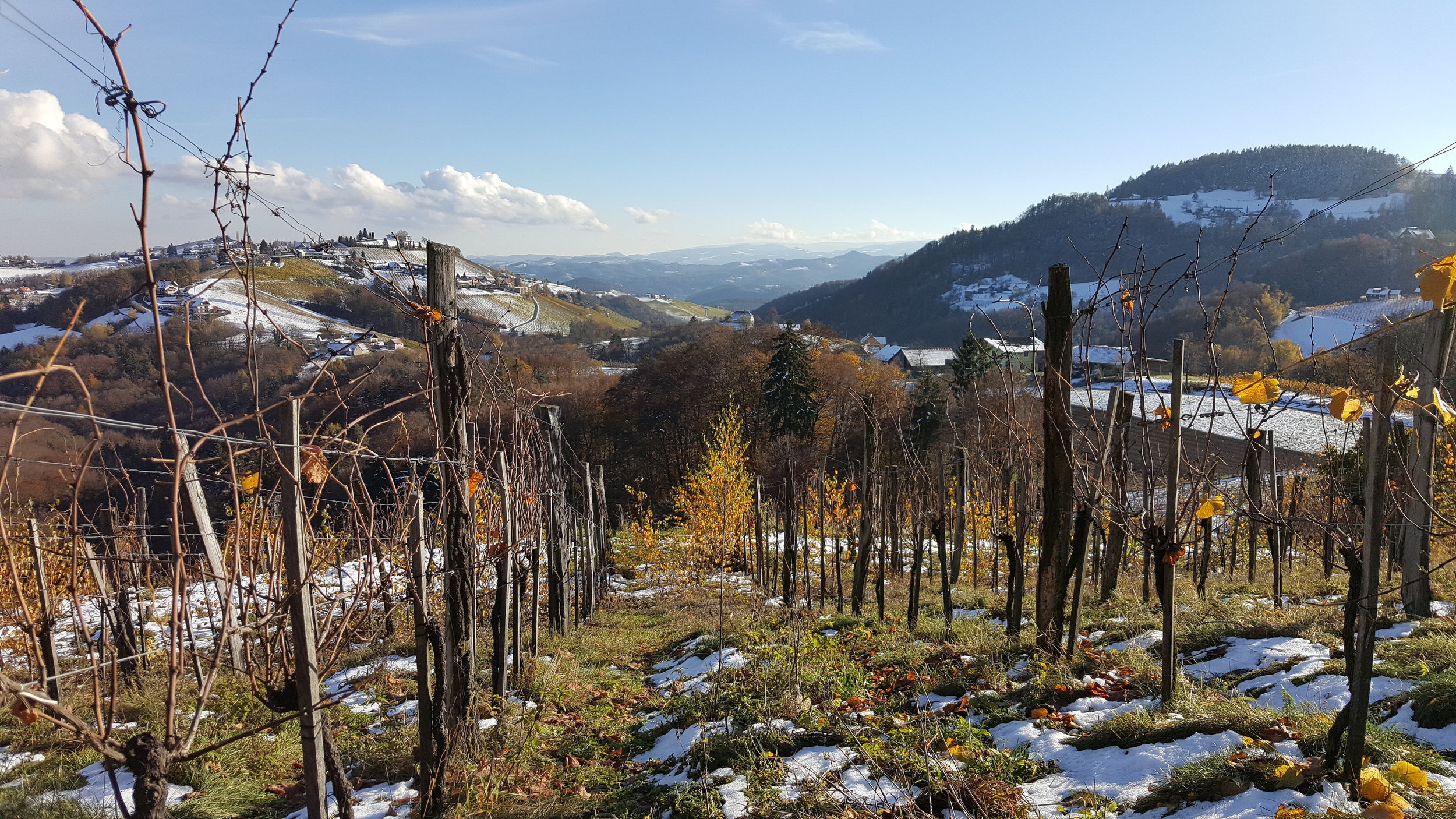 As well as Claude Courtois, Karl Schnabel in South Styria, Austria, is one of Campbell's favourite winemakers. His vineyard called Koregg is pictured above.  Photo by Campbell Burton.