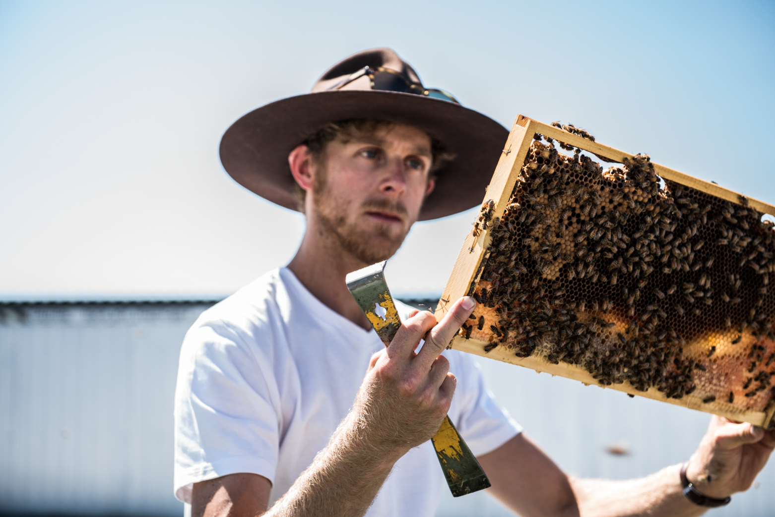 Bee One Third's director Jack Stone with one of their rooftop hives.