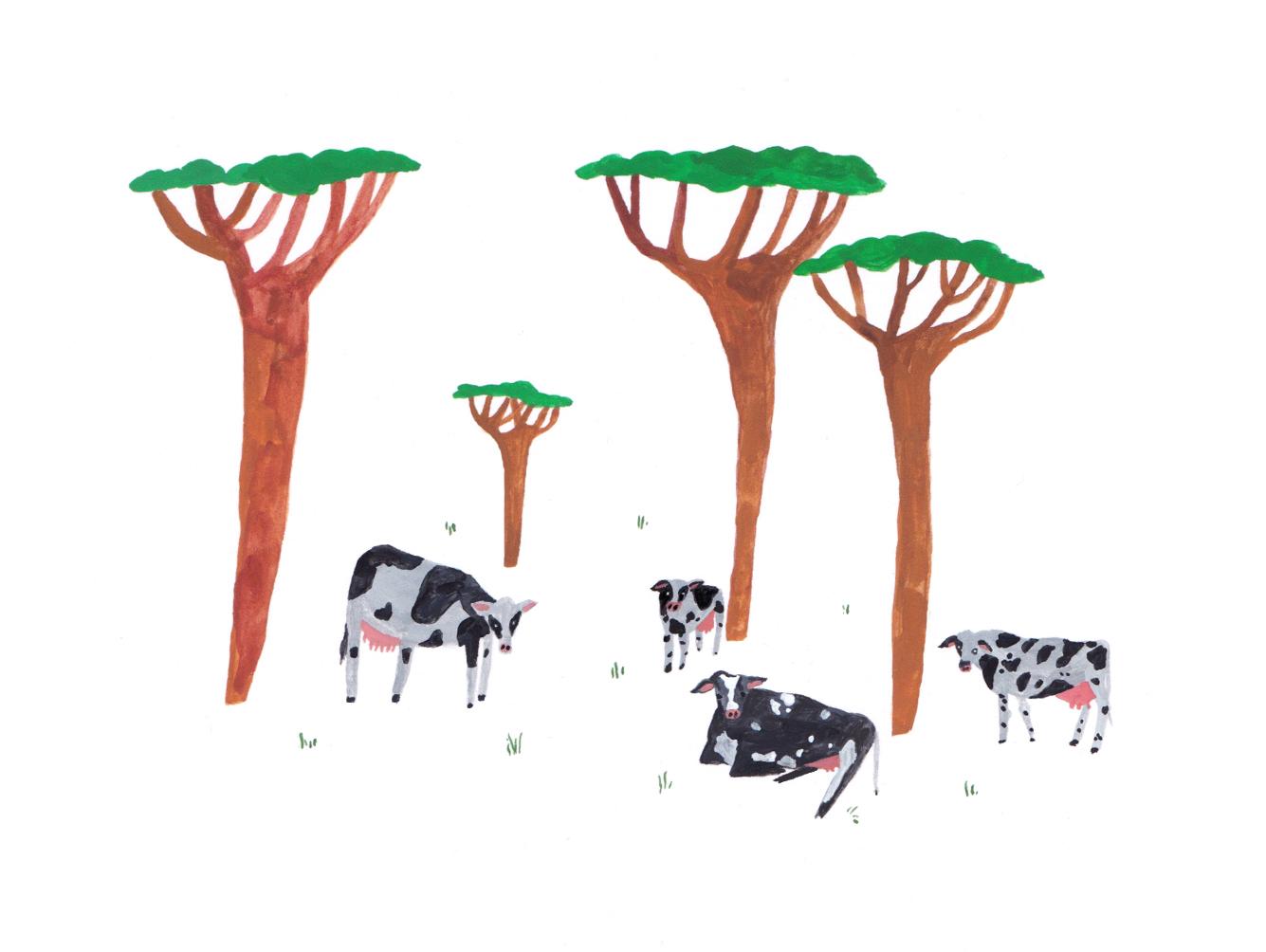 Copy of silvopasture grazing cows.jpeg