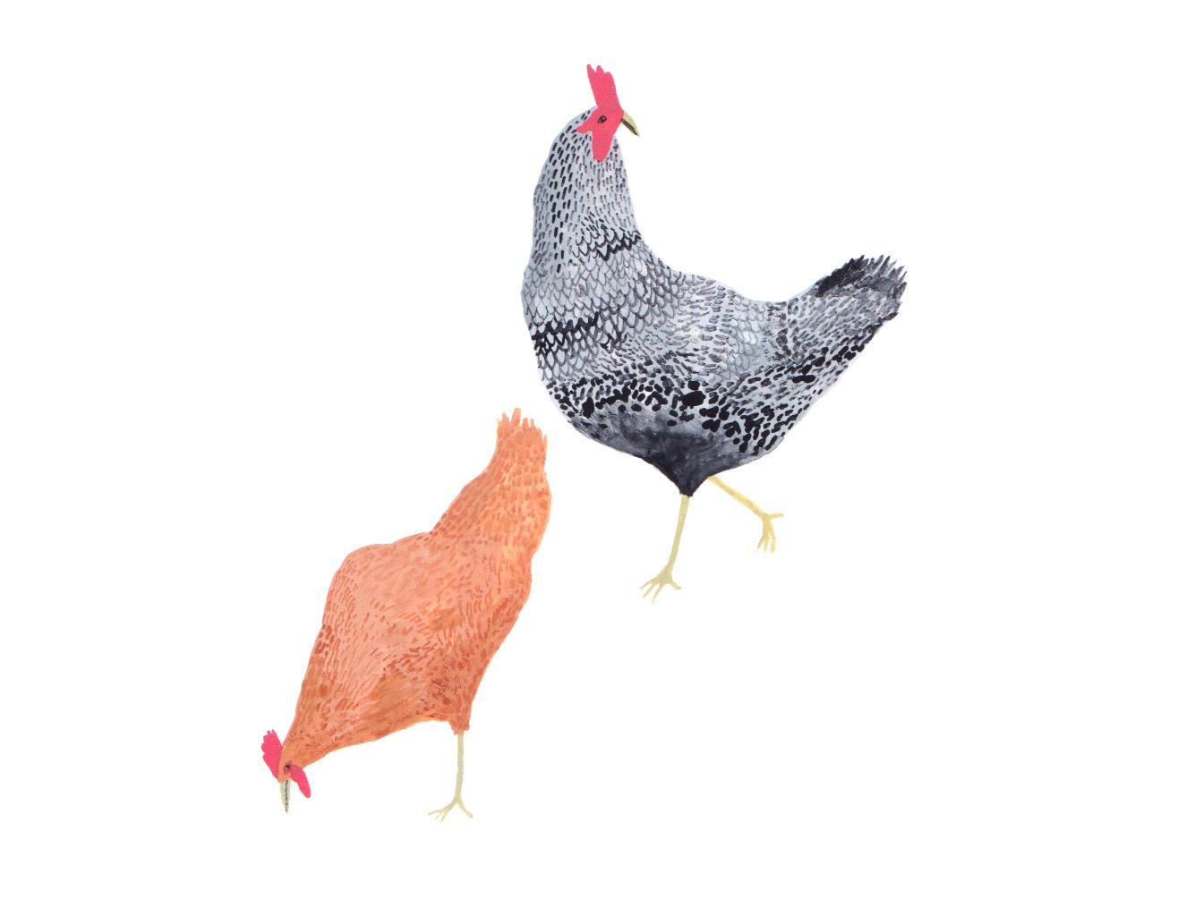 Copy of Silvopasture chickens.jpg