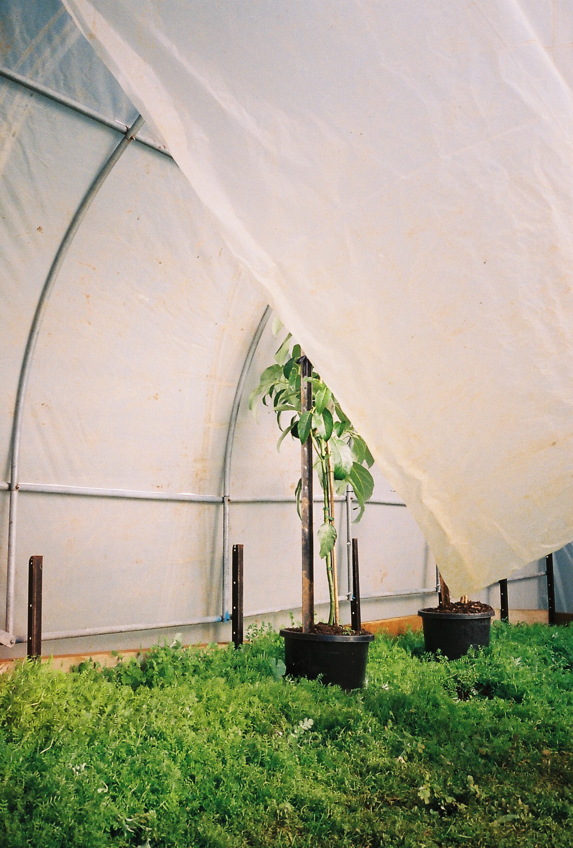 The greenhouse in Mark's home veggie garden.