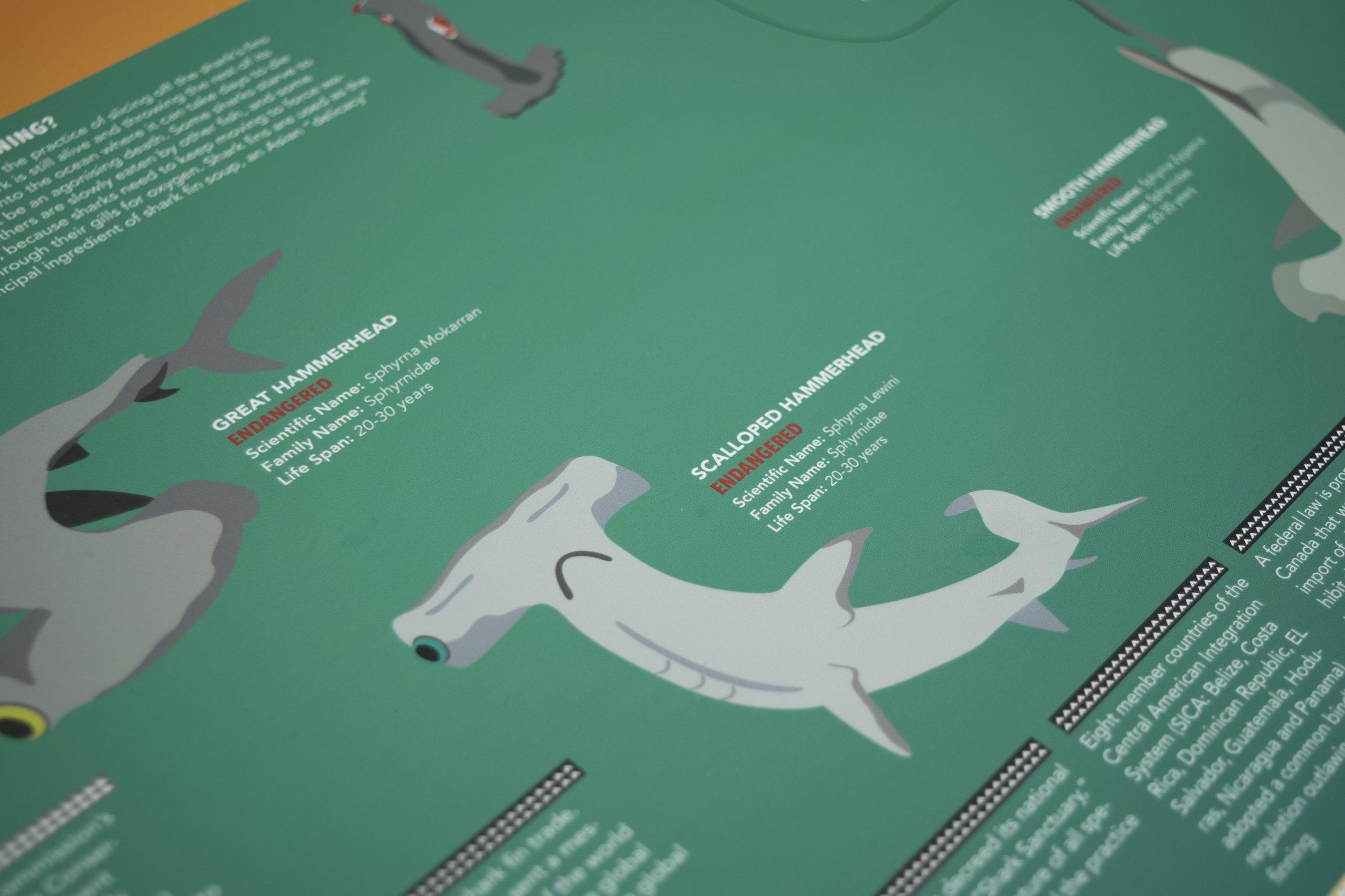 hammerhead shark2.jpg