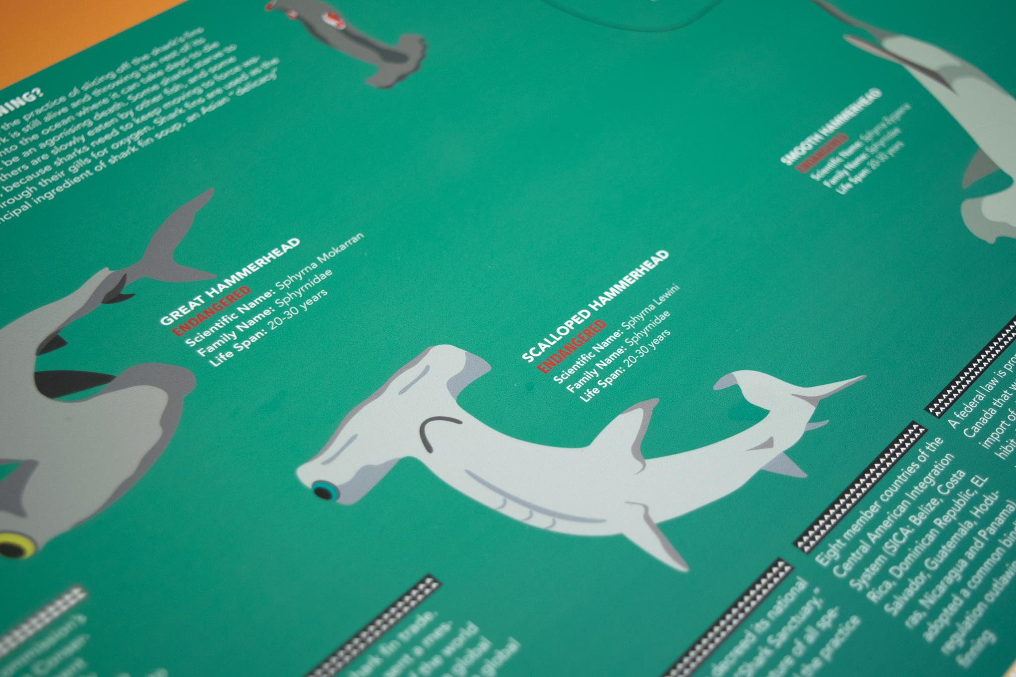 hammerhead shark2-Edit.jpg