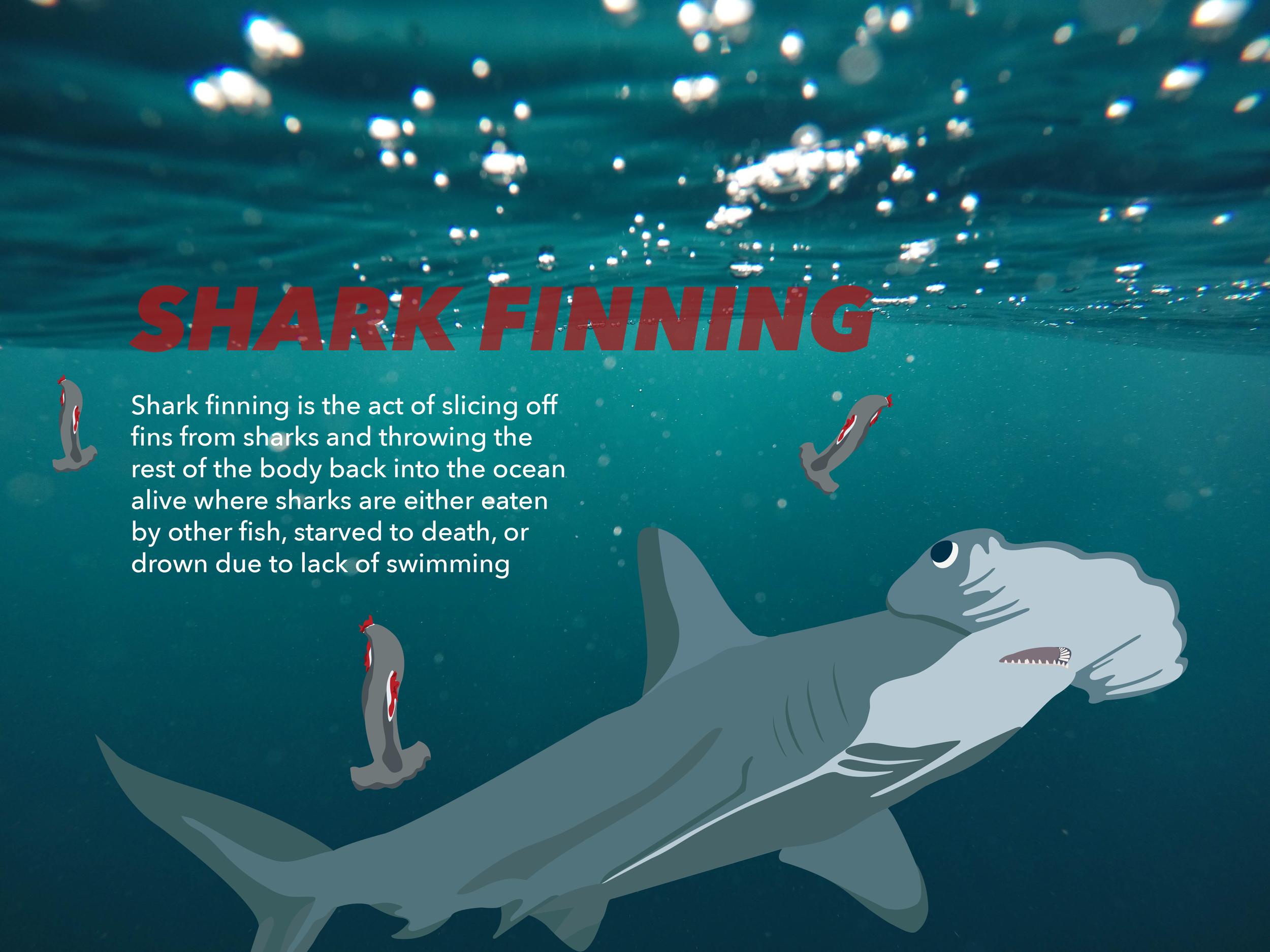 shark finning grey hammerhead.png