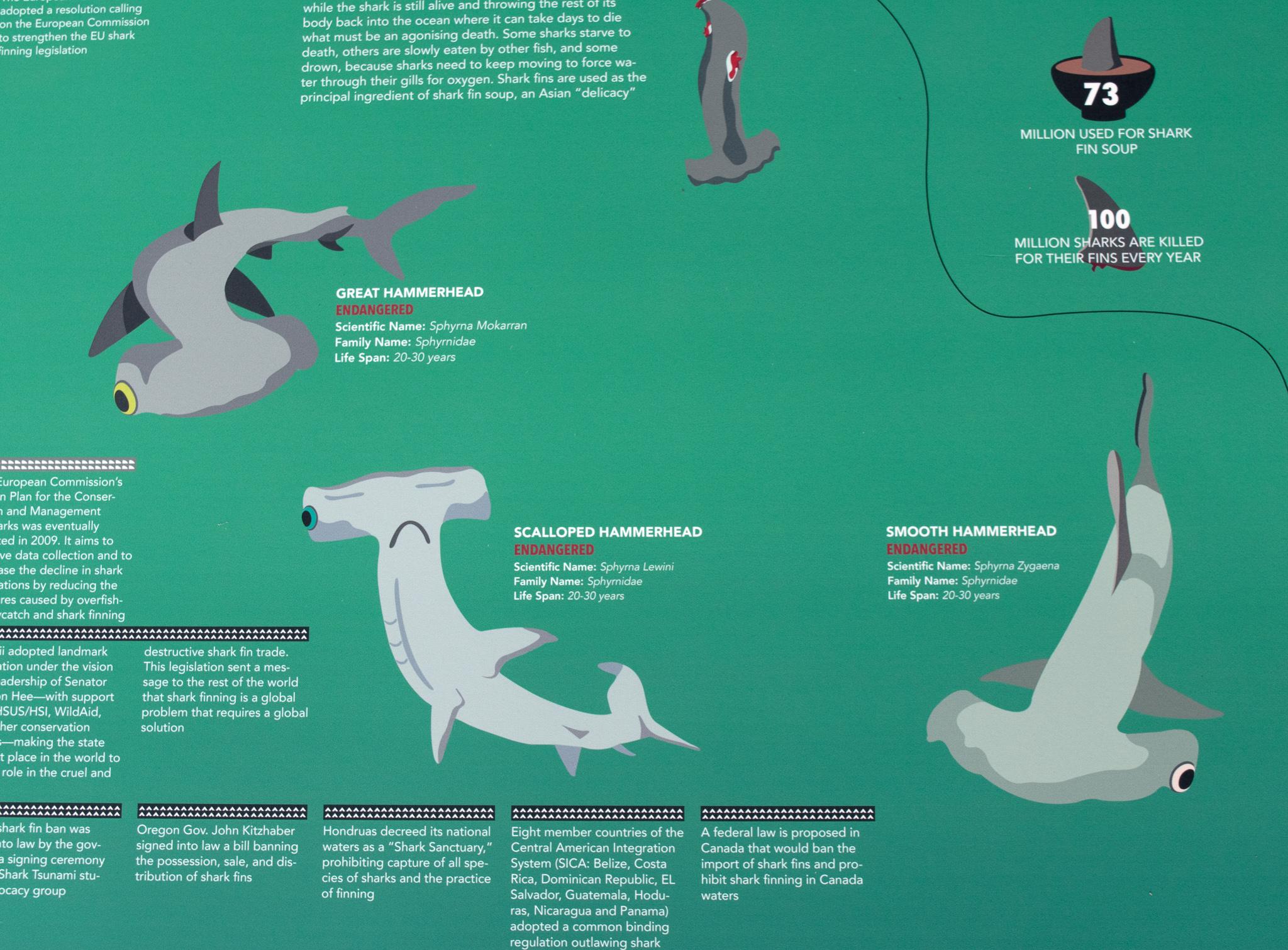 hammer sharks-Edit.jpg