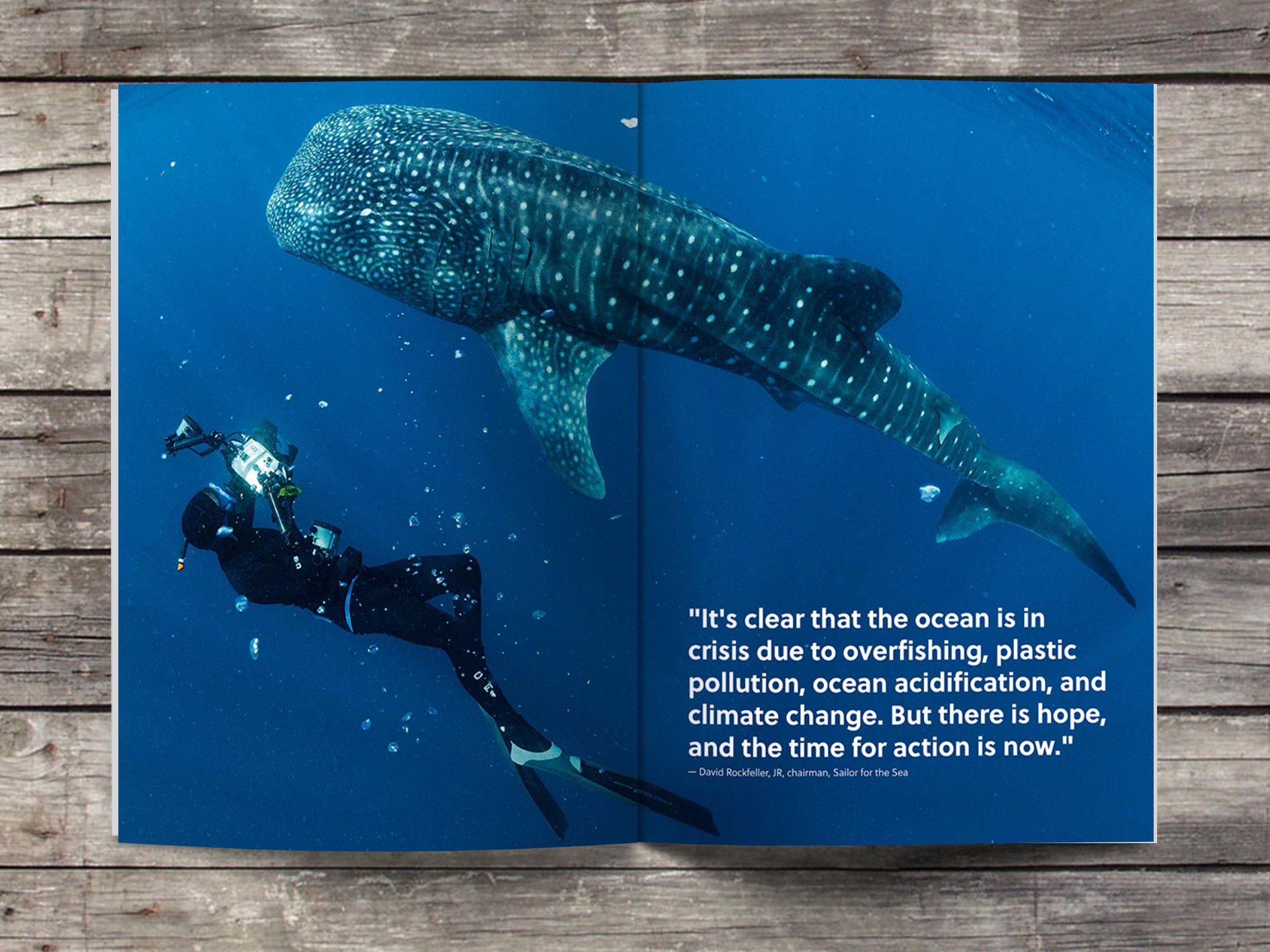 whale shark layout.png