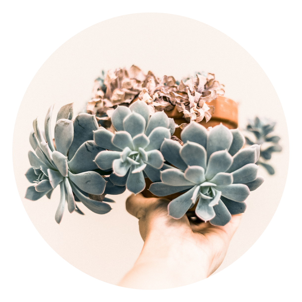 SucculentsWedding.png