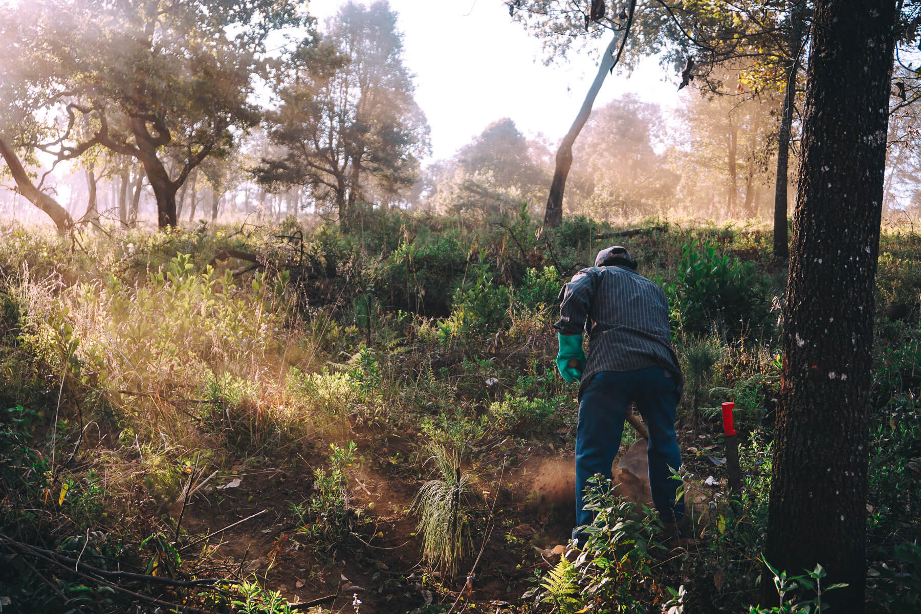 Ejido Verde Mexico reforestation project