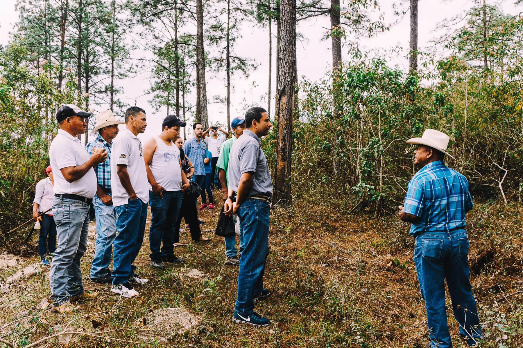Honduras pine resin tapping education