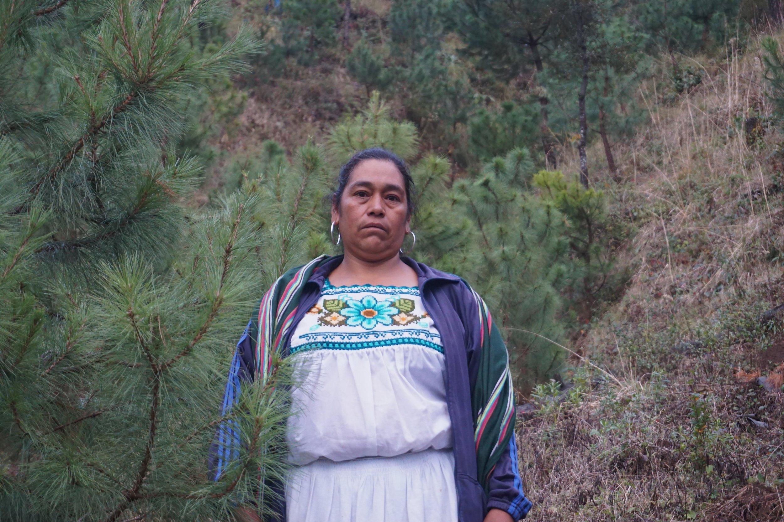 Veronica Camilla, Cherán Atzicurín pine plantation owner
