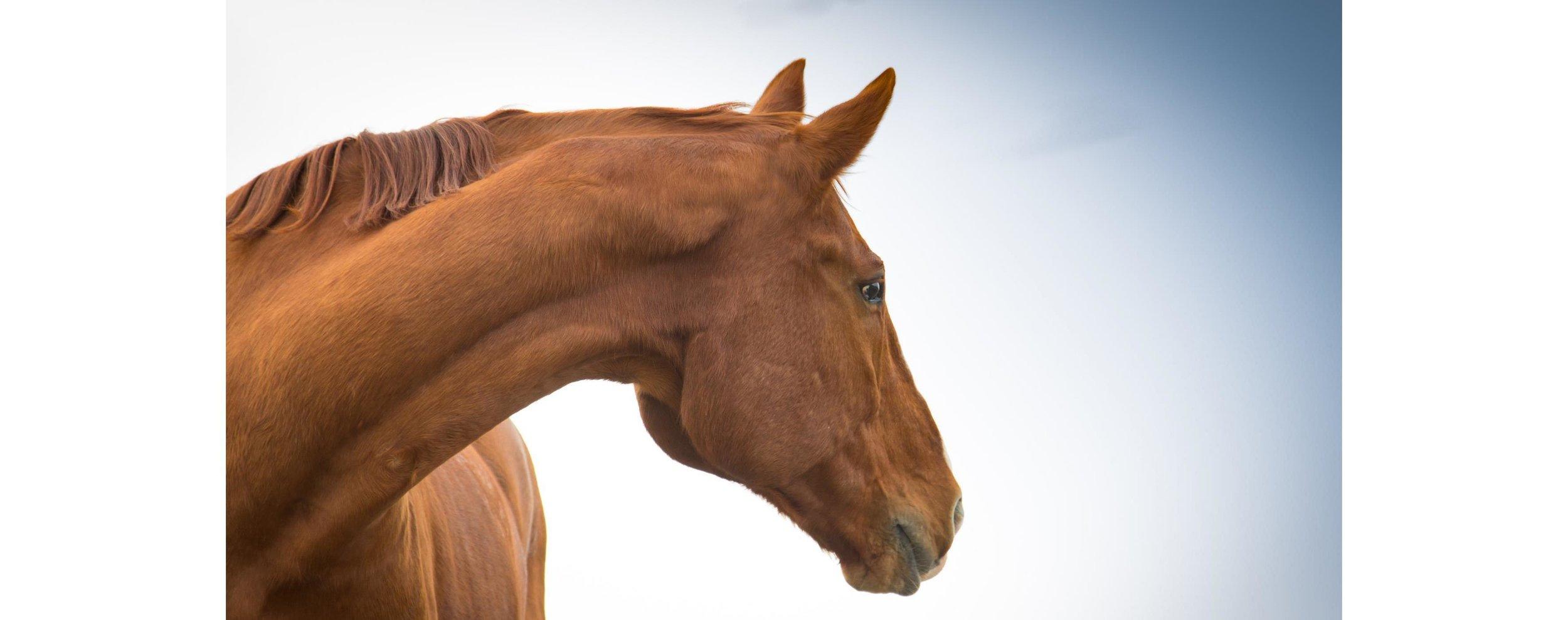 EponaMIND Horses-130.JPG