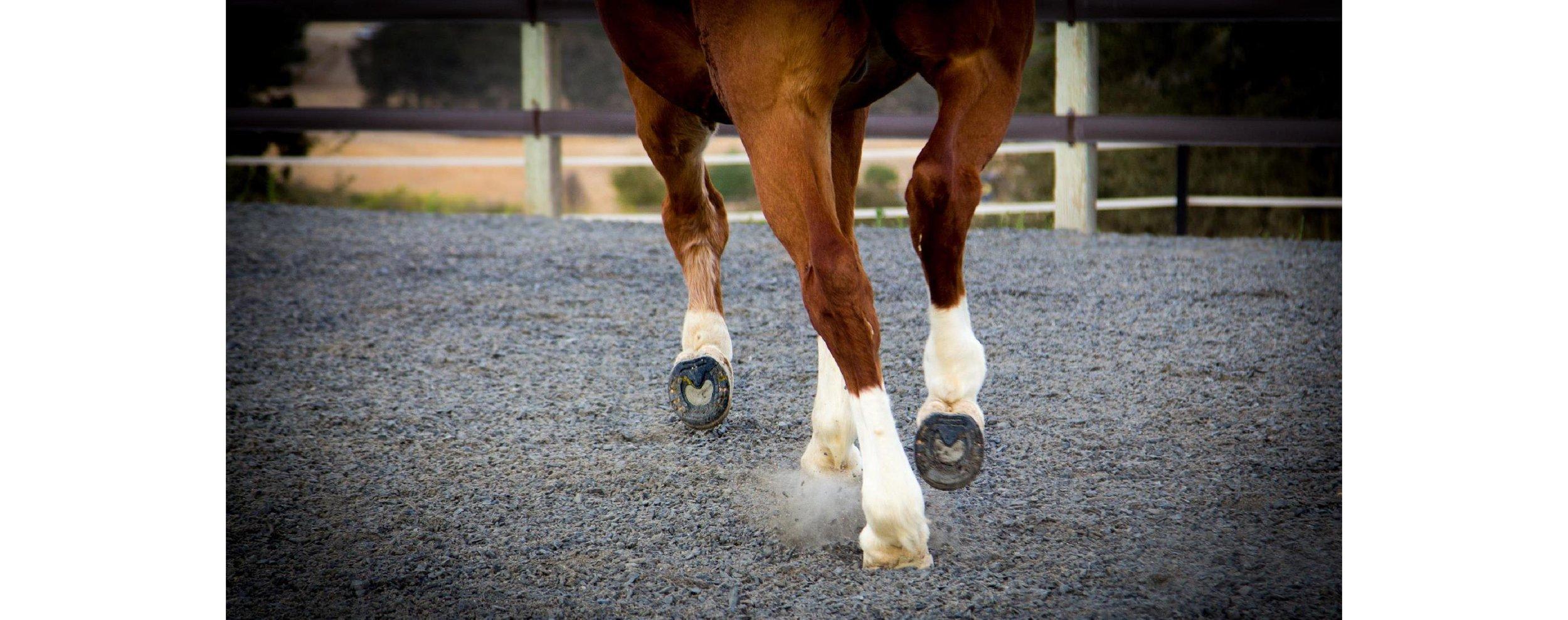 EponaMIND Horses-150.JPG