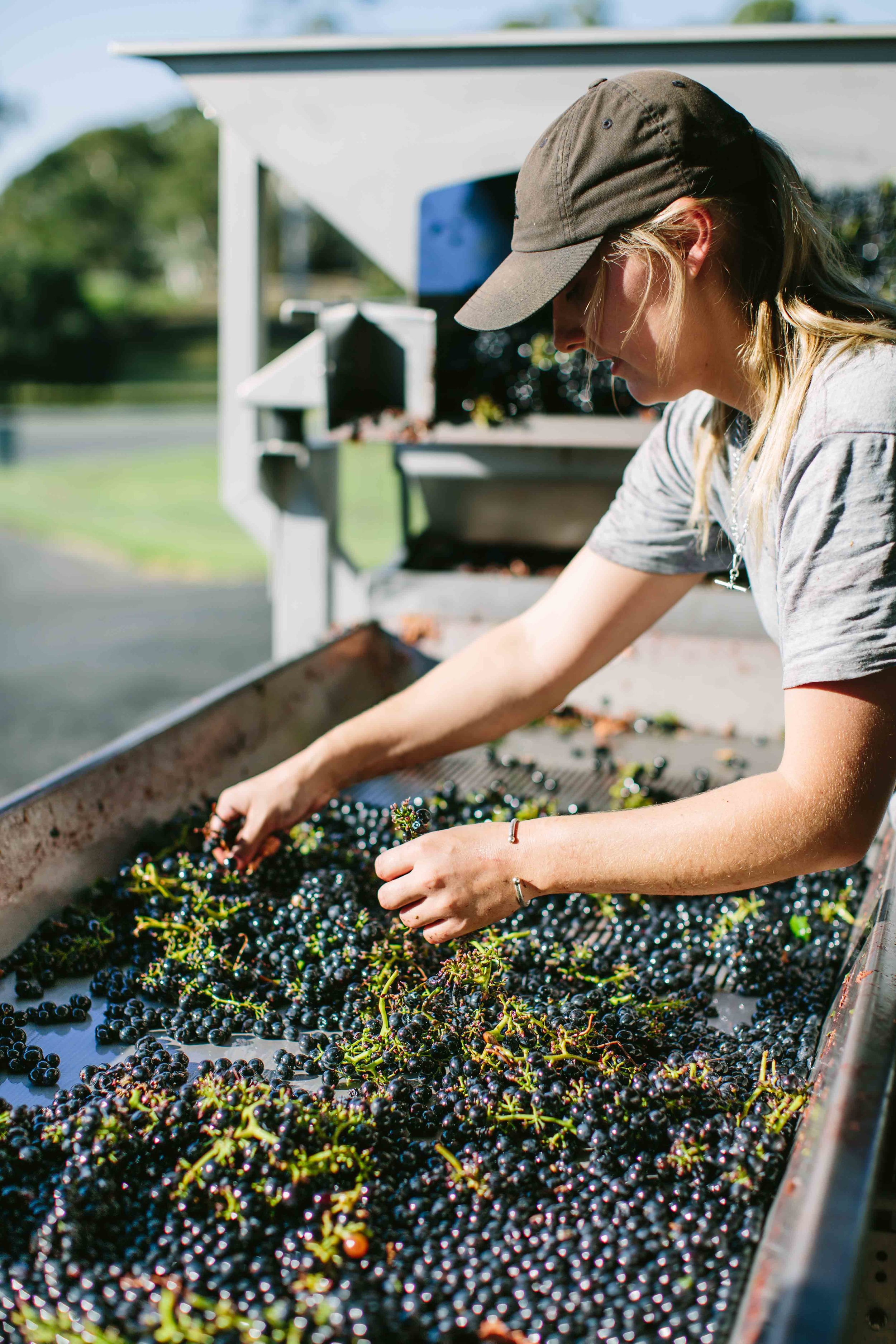 Unlike most present-day vineyards that utilise mechanised harvesting, all grapes continue to be hand-picked in the pursuit of quality.