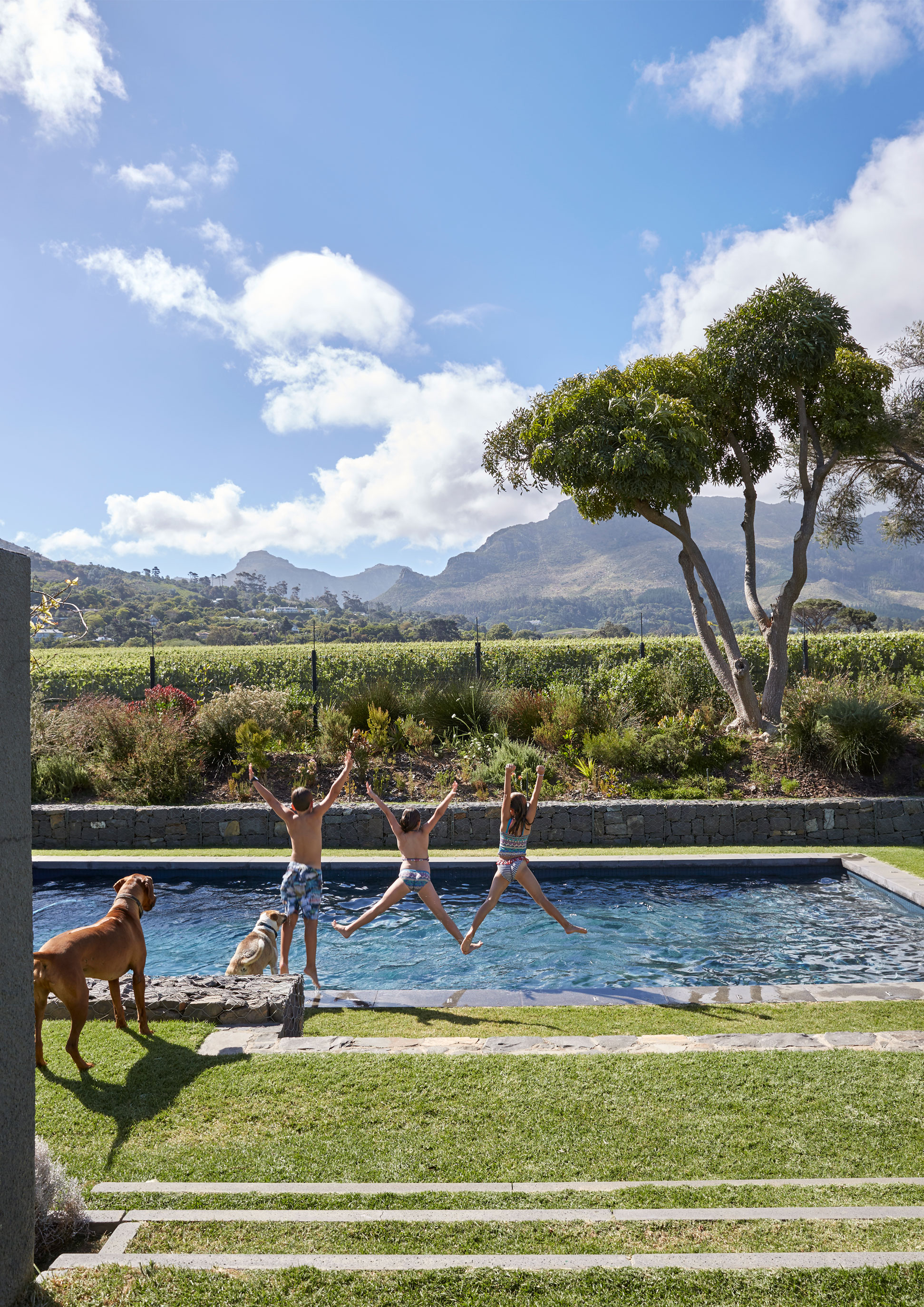 The pergola between the swimming pool and deck creates another outdoor entertainment area, and a further architectural transition between house and garden. The Bresler children, Jonty, Hannah and Ollie enjoy using it as a climbing frame. The fynbos garden along the 130-meter border between the Bresler's property and the Groot Constantia vineyard replaced what was originally a screen of trees and tall bushes. 