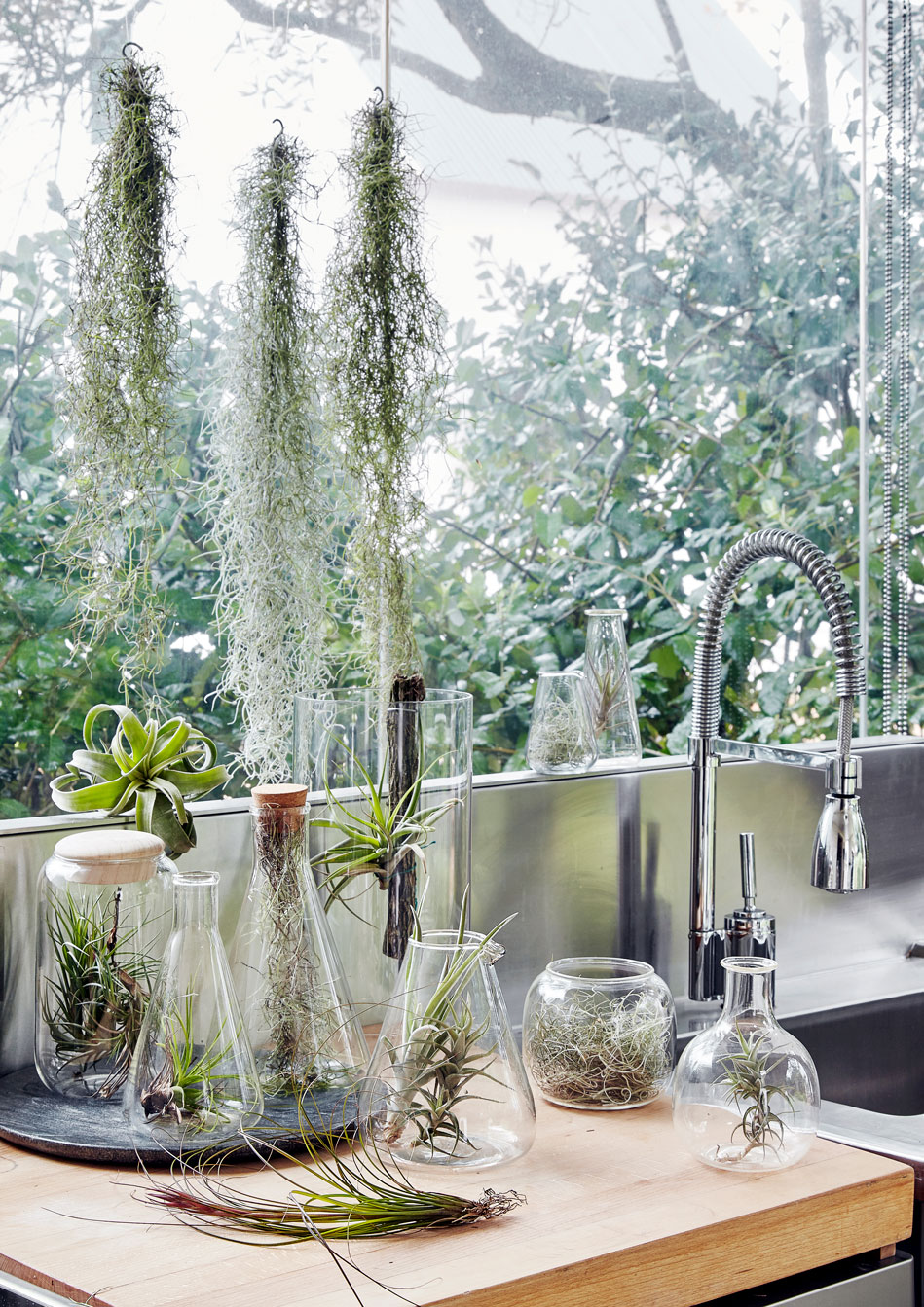 THE GLASS MENAGERIE‭ ‬  Create an eye-catching indoor miniature garden with a stripped back‭, ‬modern aesthetic‭. ‬This contemporary twist on the classic terrarium concept sees a variety of air plants arranged in laboratory-style glass beakers‭, ‬vases and preserve‭- ‬and storage jars‭. ‬Create a diaphanous effect by also hanging a few of your air plants in front of a window‭; ‬use transparent fishing gut and hooks to make a super-simple‭ ‬‮!‬٪floating‮!&‬‭ ‬installation‭. ‬