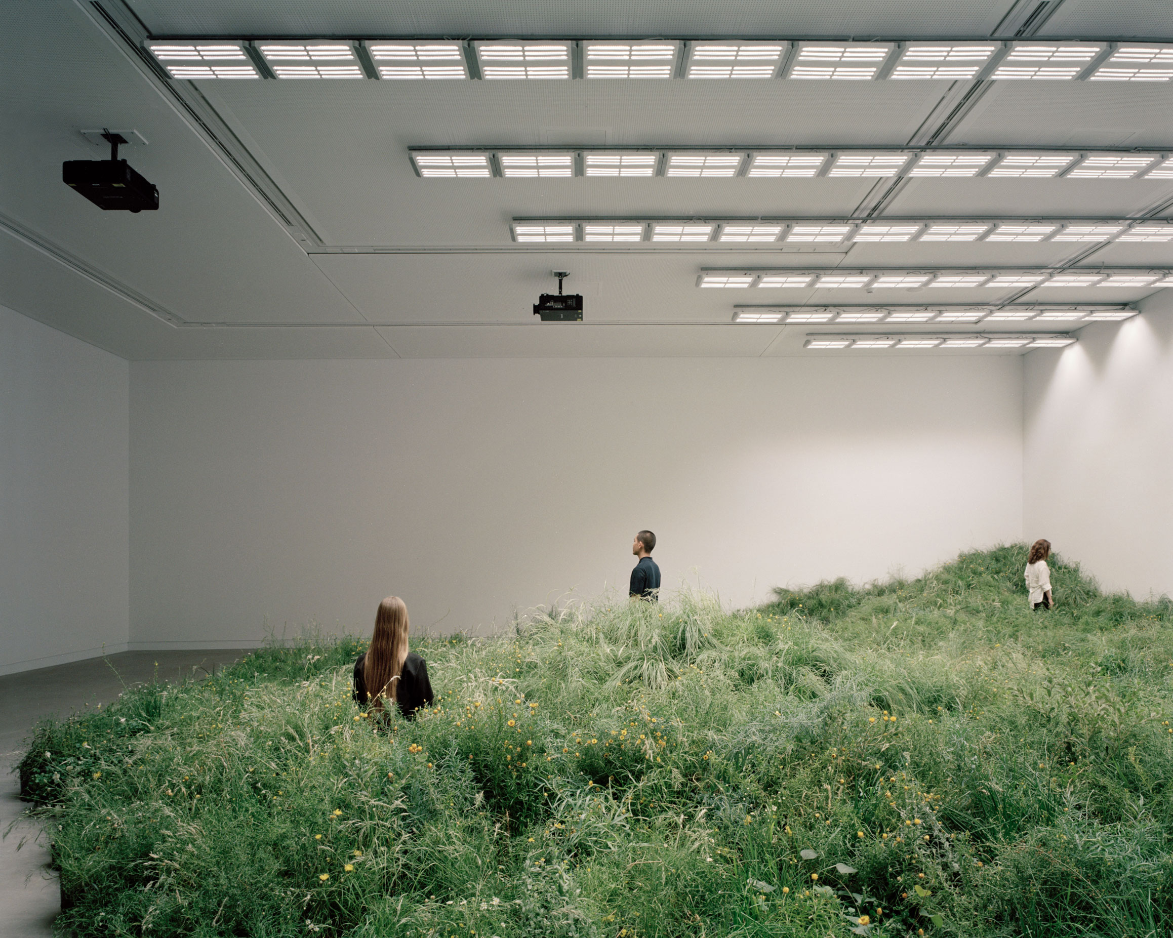 The main component of the exhibition, Grasslands Repair, includes more than 10,000 plants from 65 species of Victorian Western Plains grasses. Image: Rory Gardiner