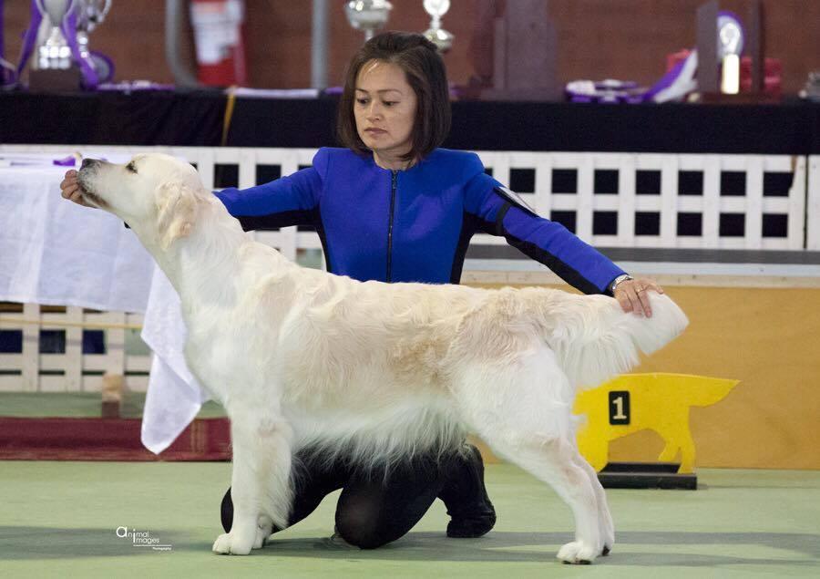 conarhu_golden_retrievers_perth_australia_ruth_connah_our_dogs_ramble_gallery_2.jpg