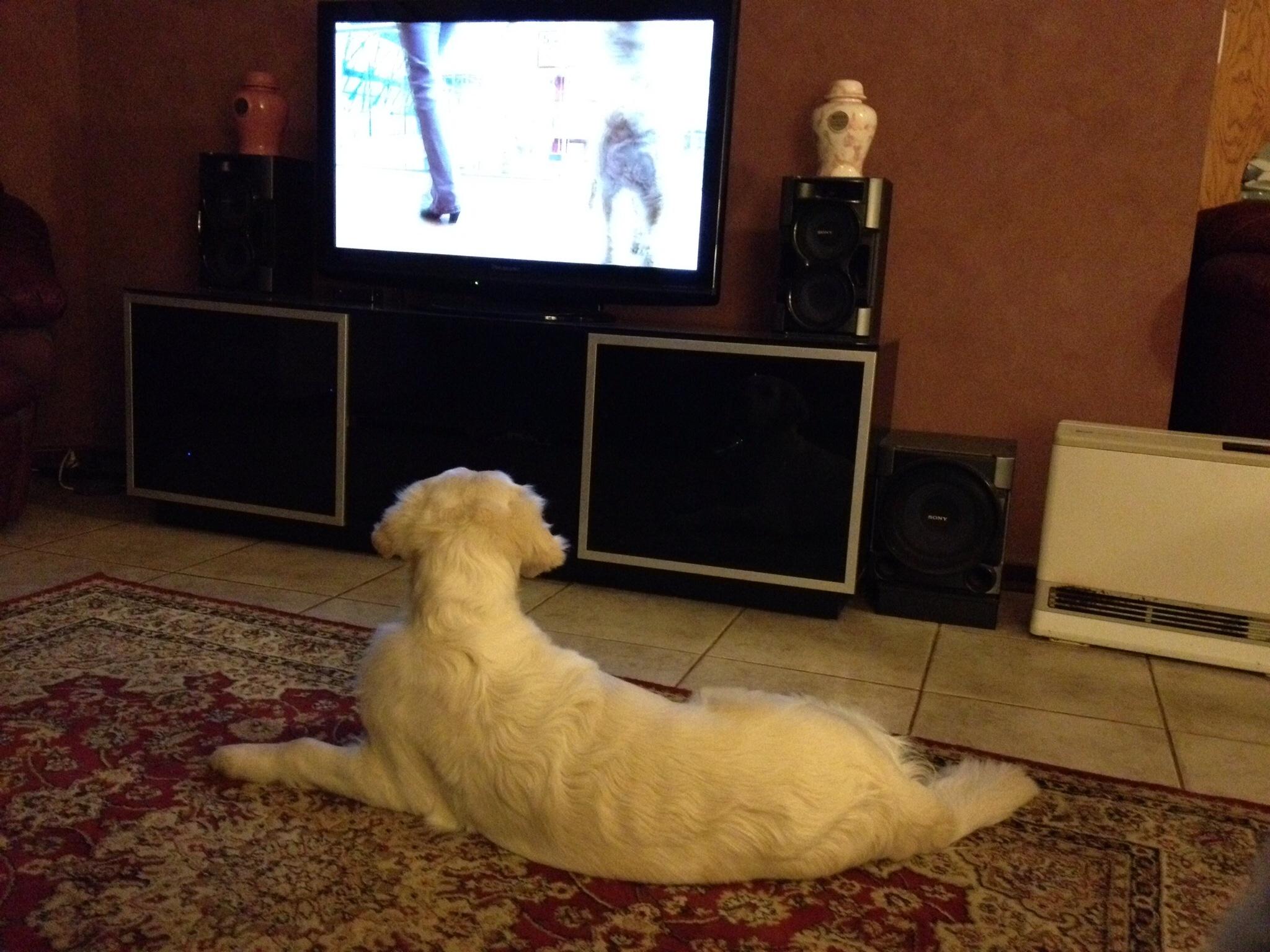 conarhu_golden_retrievers_perth_australia_ruth_connah_our_dogs_ramble_gallery_4.jpg
