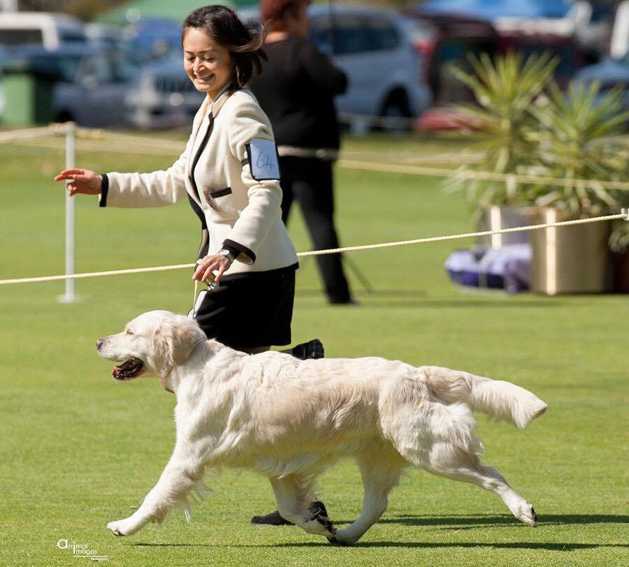 conarhu_golden_retrievers_perth_australia_ruth_connah_our_dogs_ramble_gallery_1.jpg