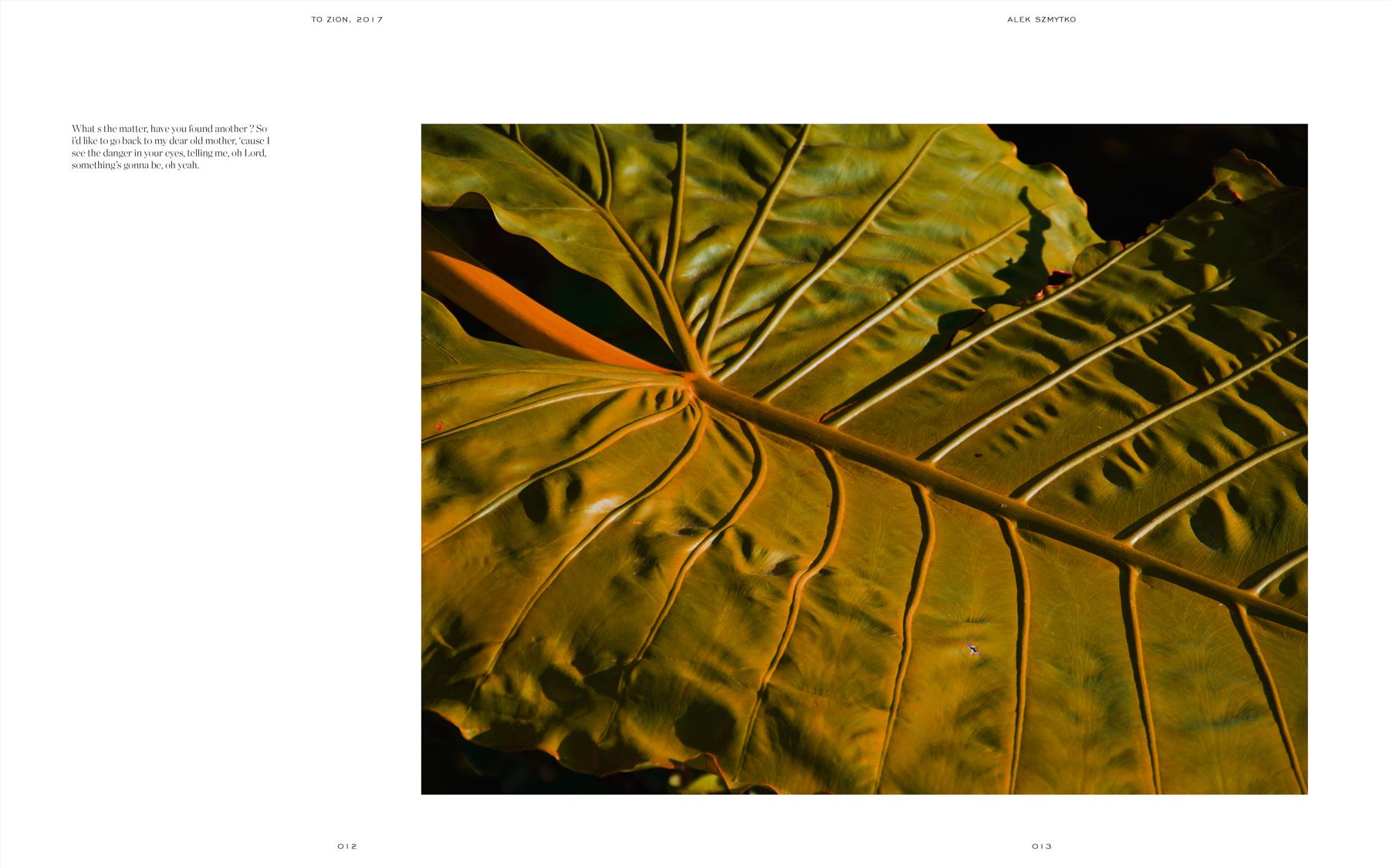 Alek-szmytko-jamaica-6.jpg