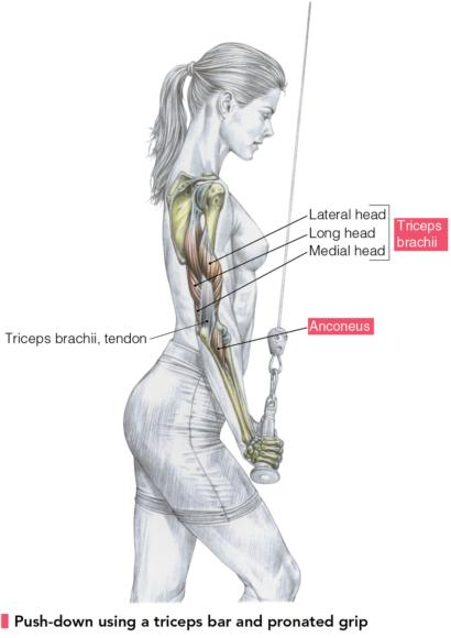 Photo from Delavier's Women's Strength Training Anatomy Workouts