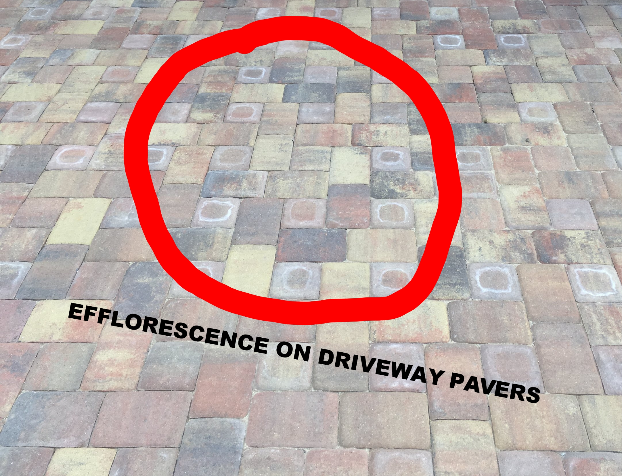 EFLO on a Recently Installed Paver Driveway. Learn how to treat this and more!