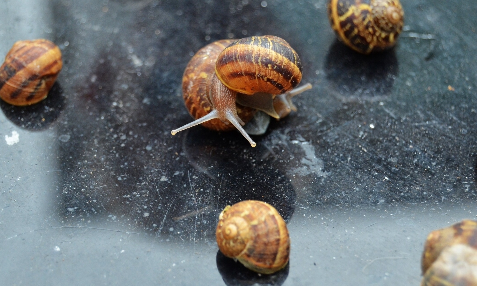 Gene Pensiero - Available on Unsplash.Snails are creatures that very much symbolise degrowth and its visions – including slowing down, having an informed sense of direction and living differently.