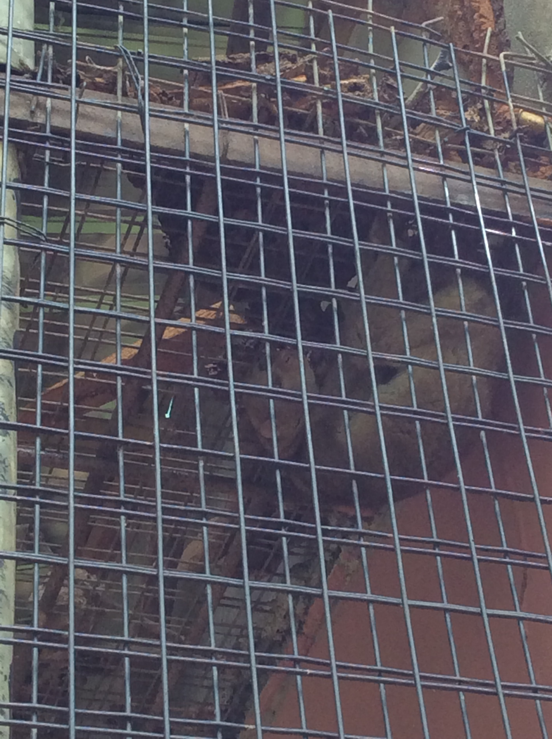 BUSH BABY ANIMAL IN THE ZOO | The Ajala Bug