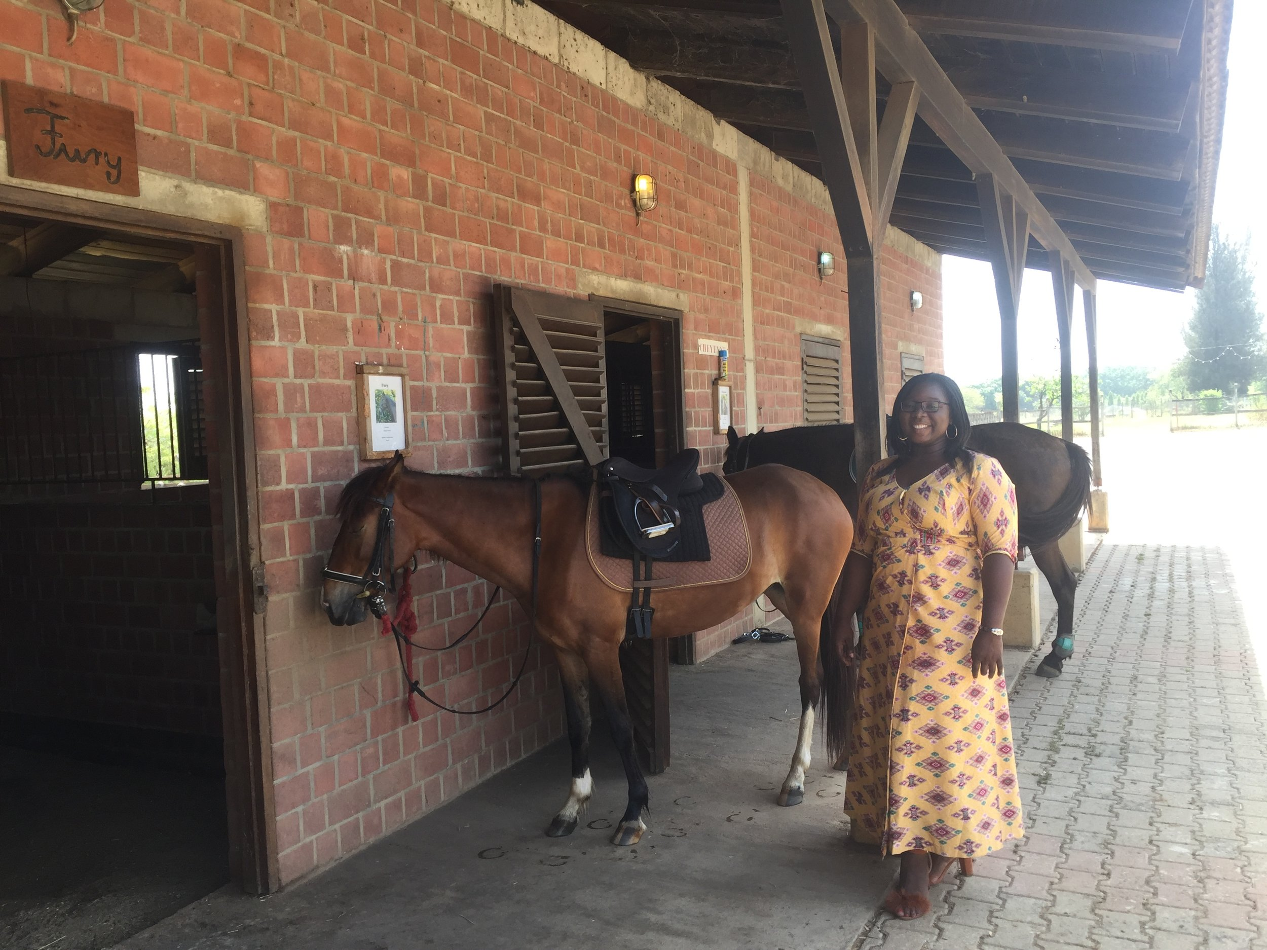 The horses at the horse stable