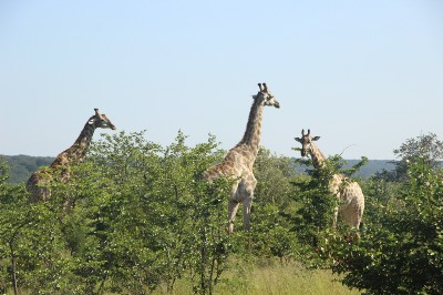 Stanley & Livingstone private game reserve