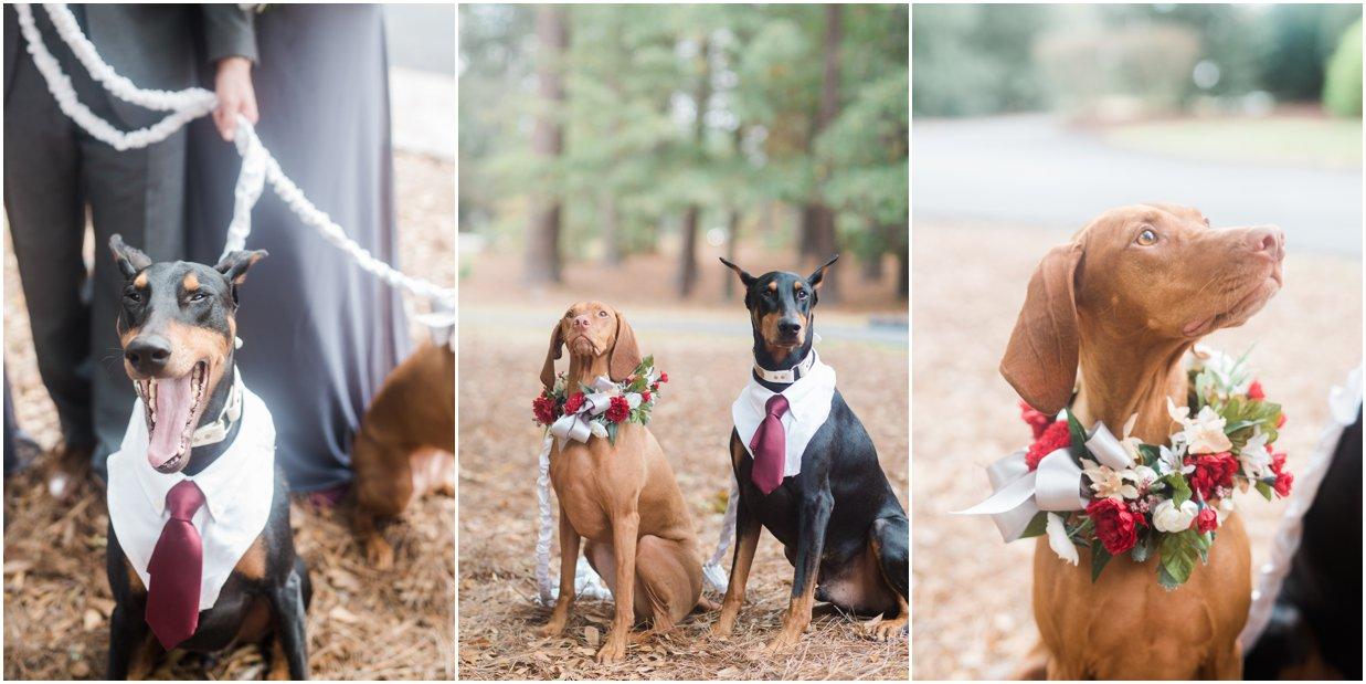 North Carolina Wedding Photographer Bow Tie Collaborative - Dogs at Wedding Ceremony.jpg