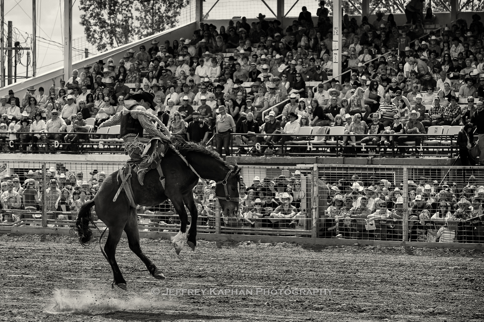 World Famous Bucking Horse Sale bronc rider