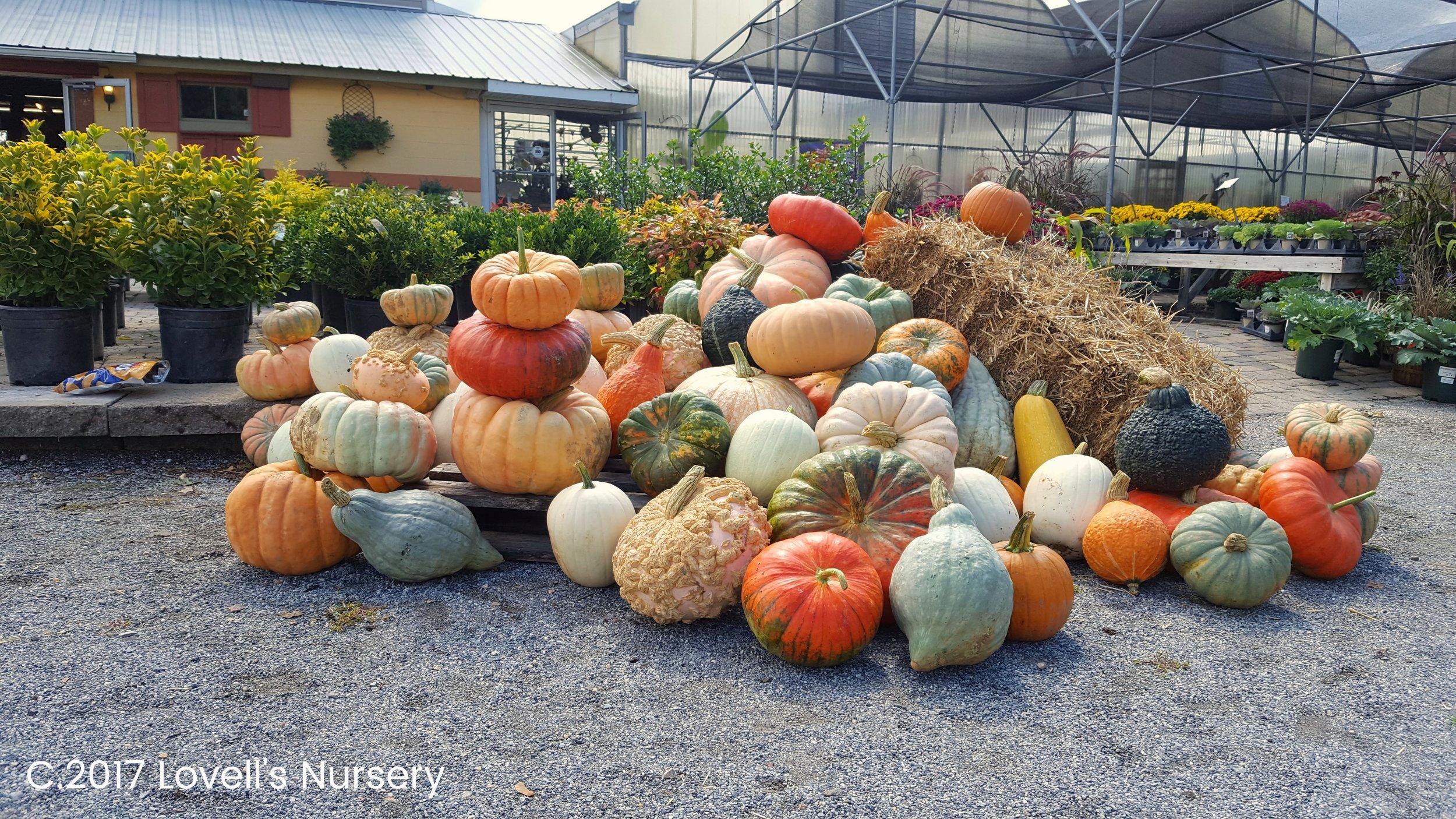 pumpkinpile.jpg
