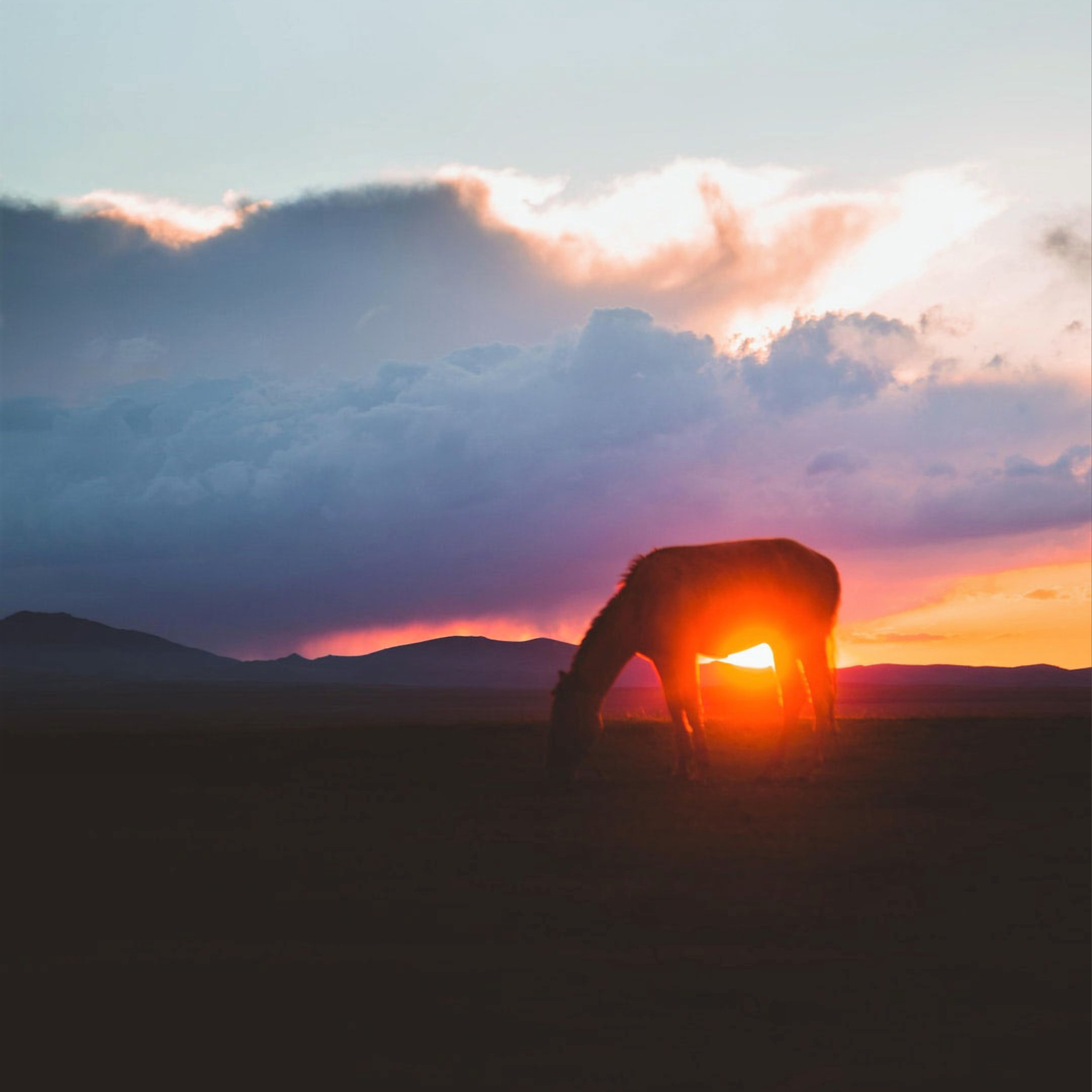 Horse at sunset.jpg