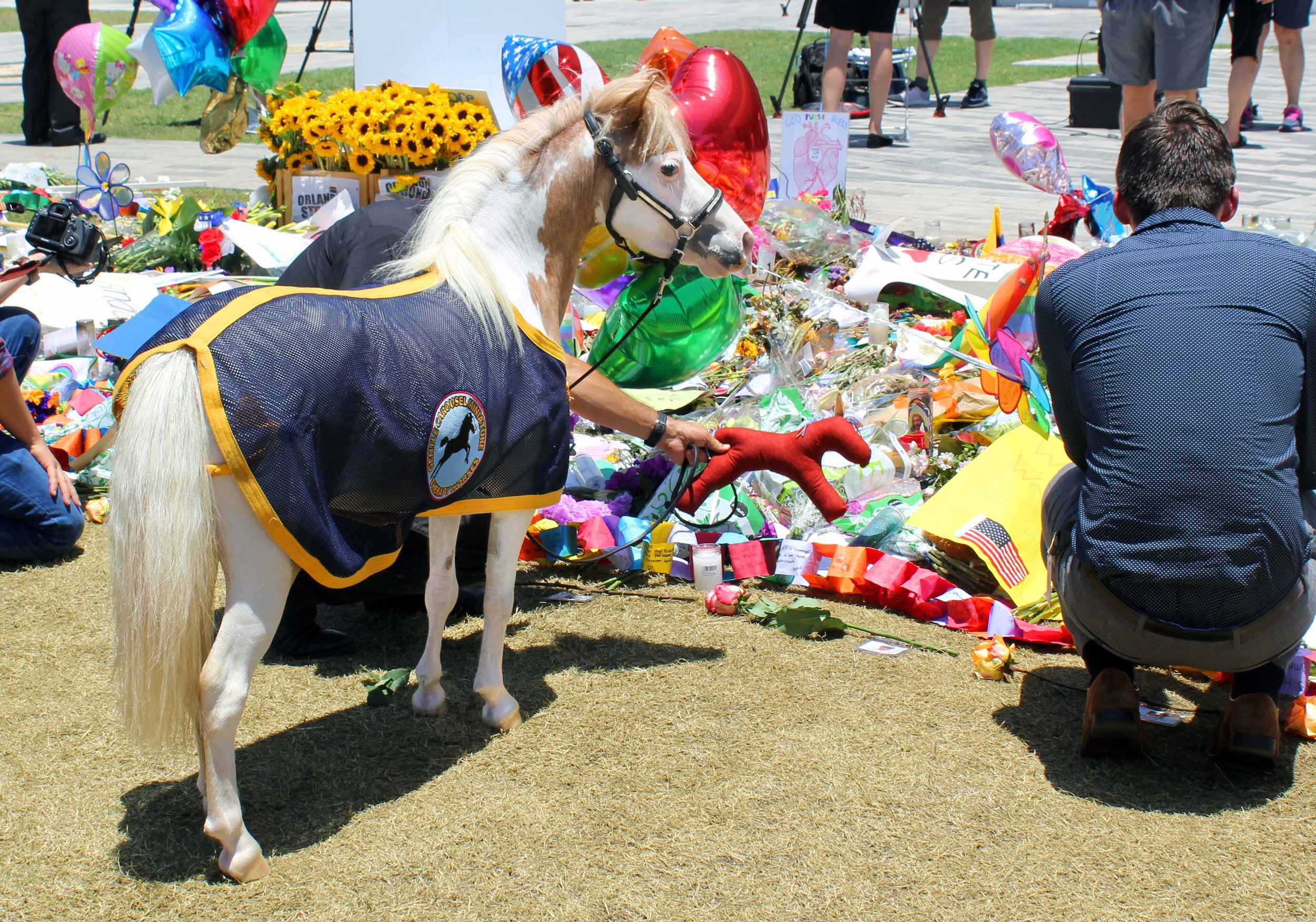 Therapy horse Catherine at the Pulse nightclub memorial in Orlando, FL