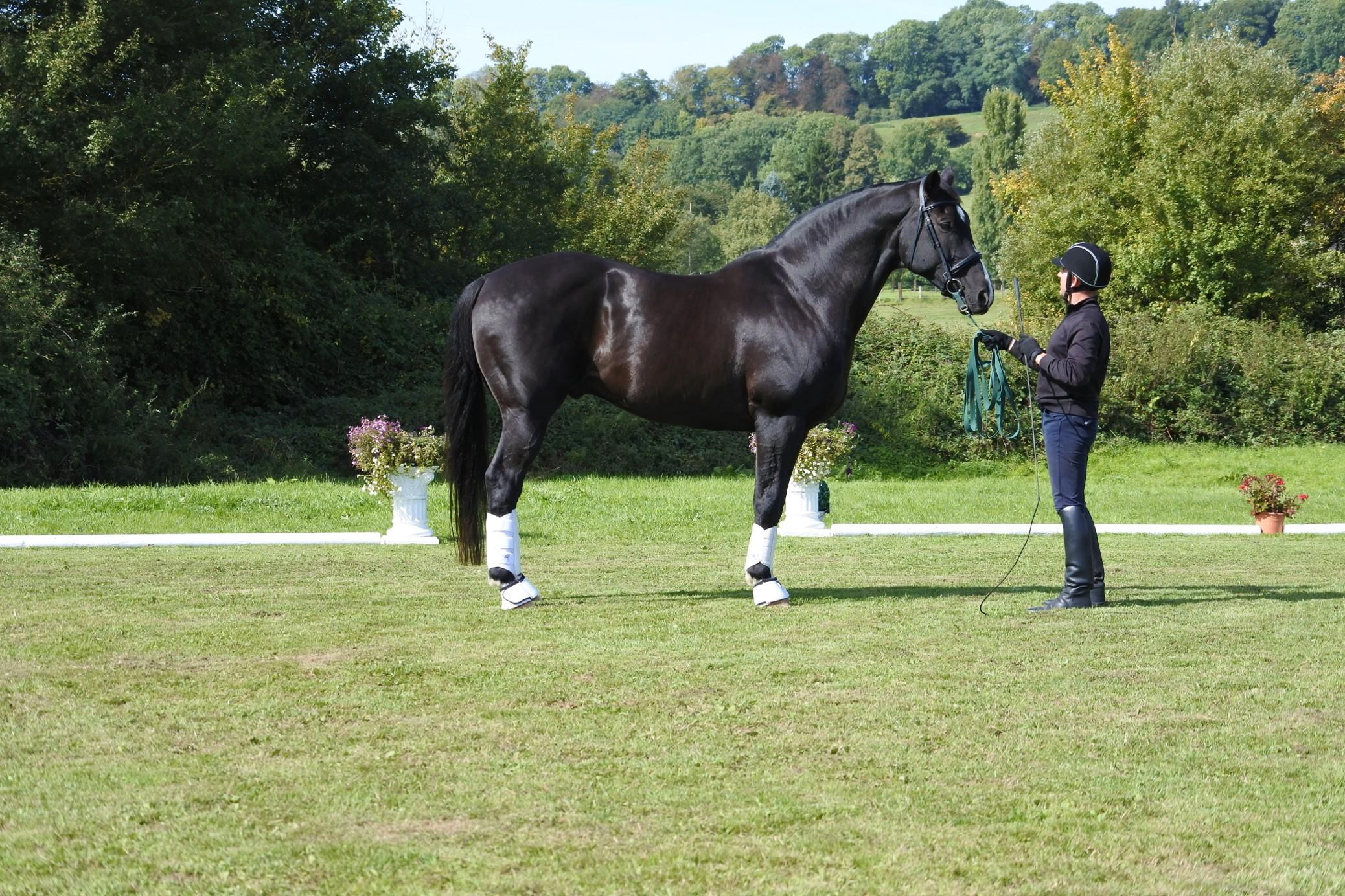Simon with horse.jpg