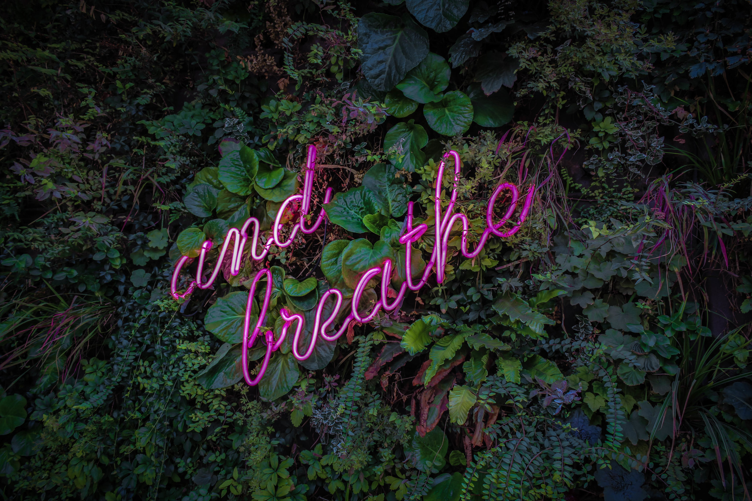 """Background of green plants with a neon sign saying """"and breathe"""""""