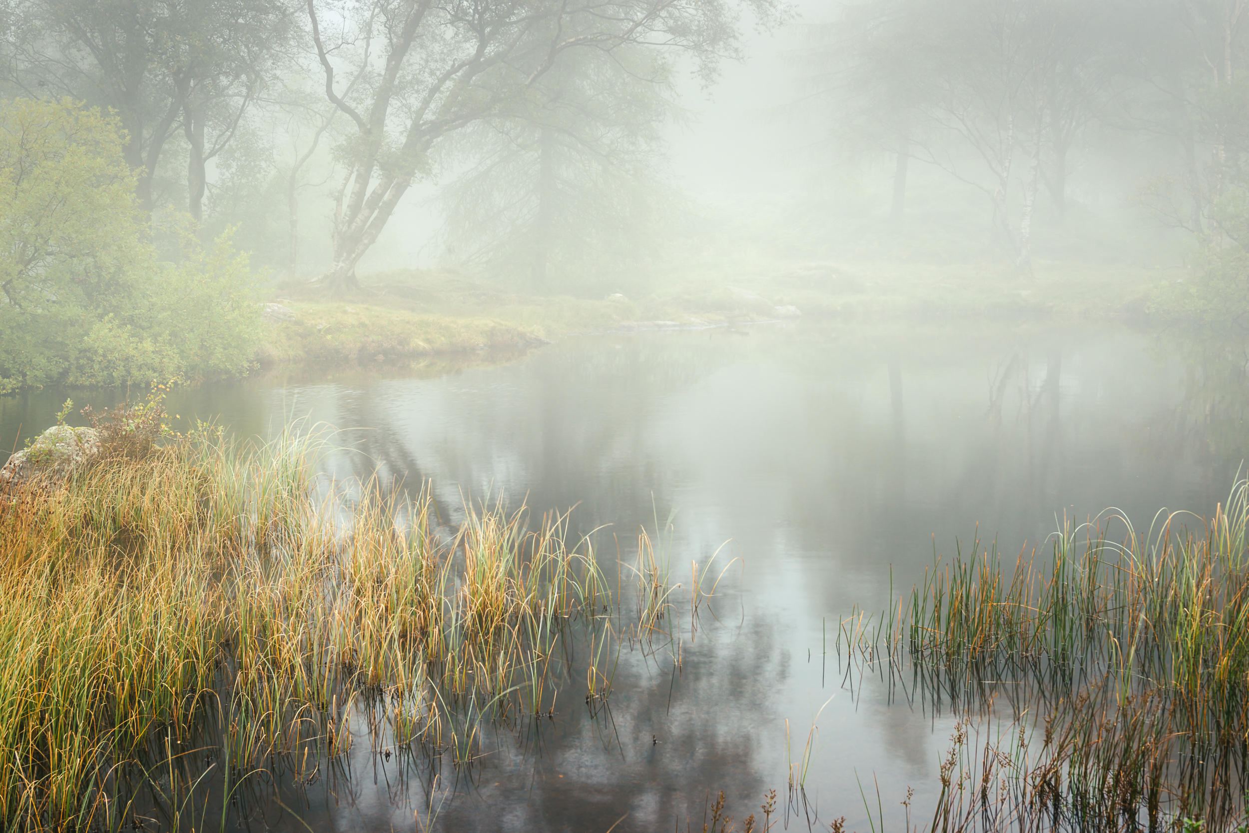 Tarn Tales IV - Holme Fell