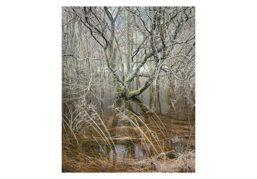 Tapestries-of-Thirlmere-overflow9401.jpg