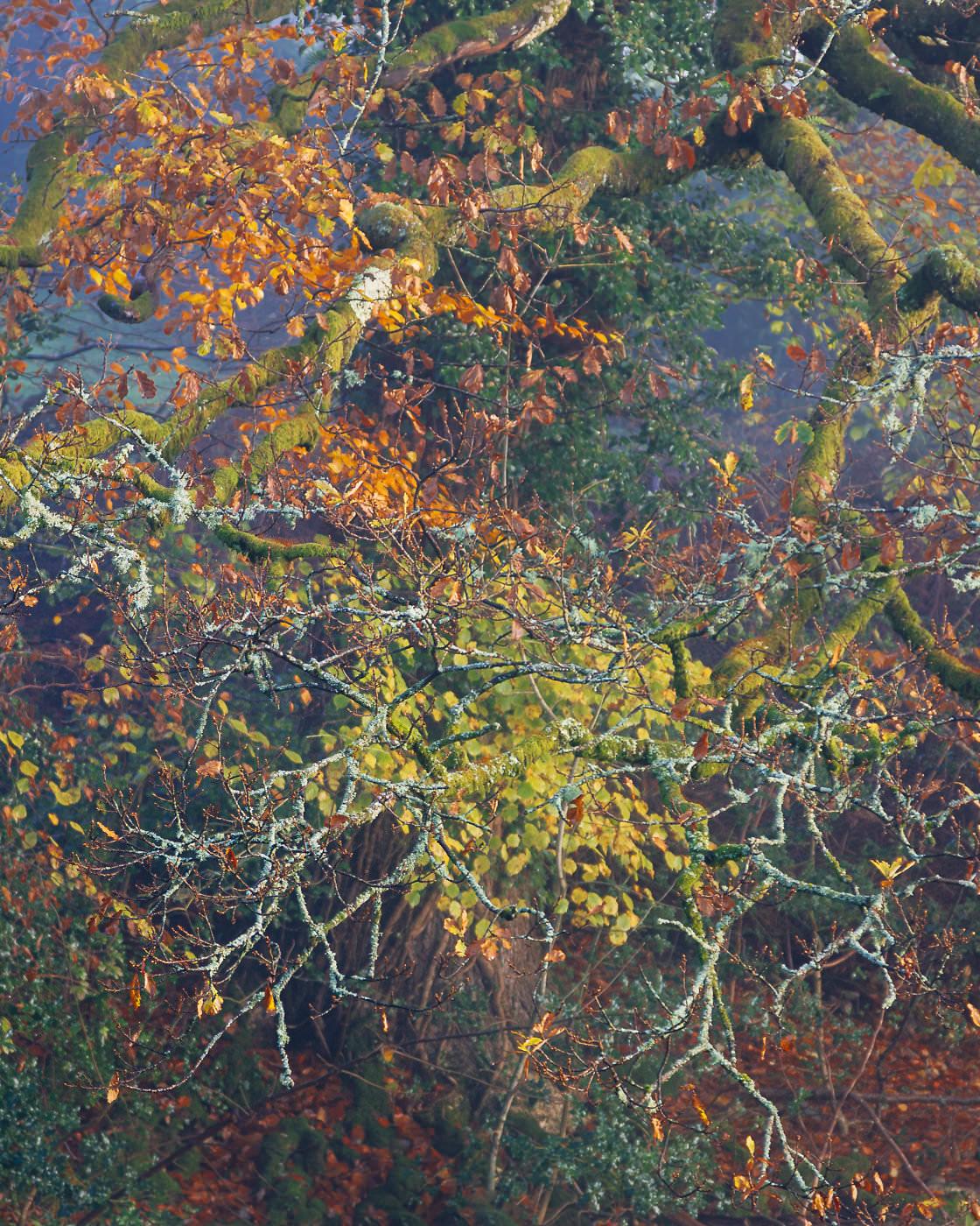 Overhanging - River Brathay