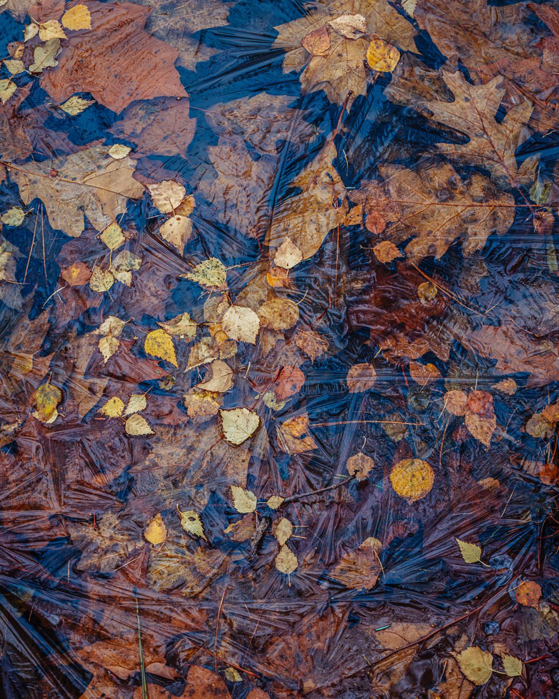 Forever Autumn - Dead Lake, Delamere