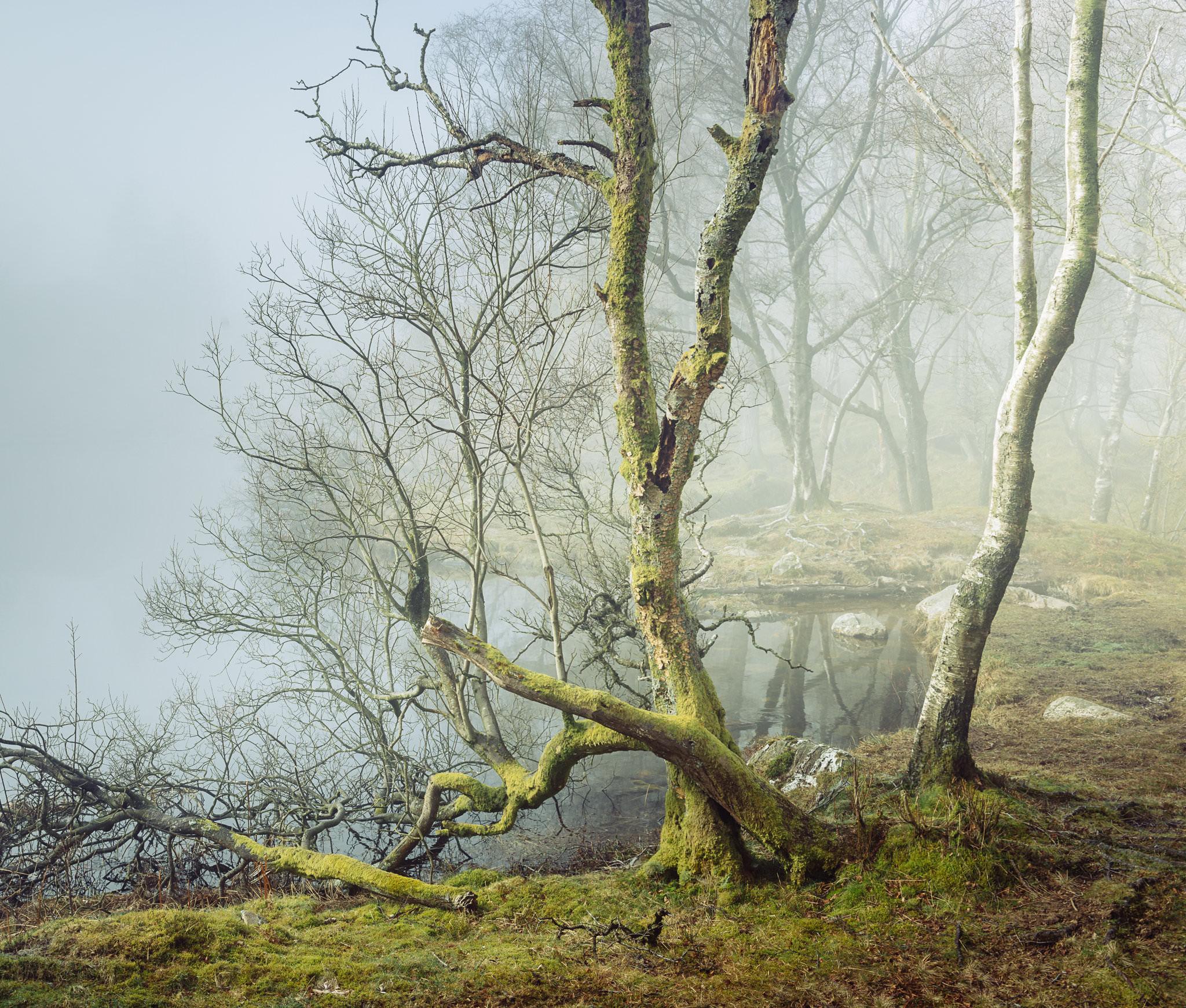 Tarn Tales - Holme Fell