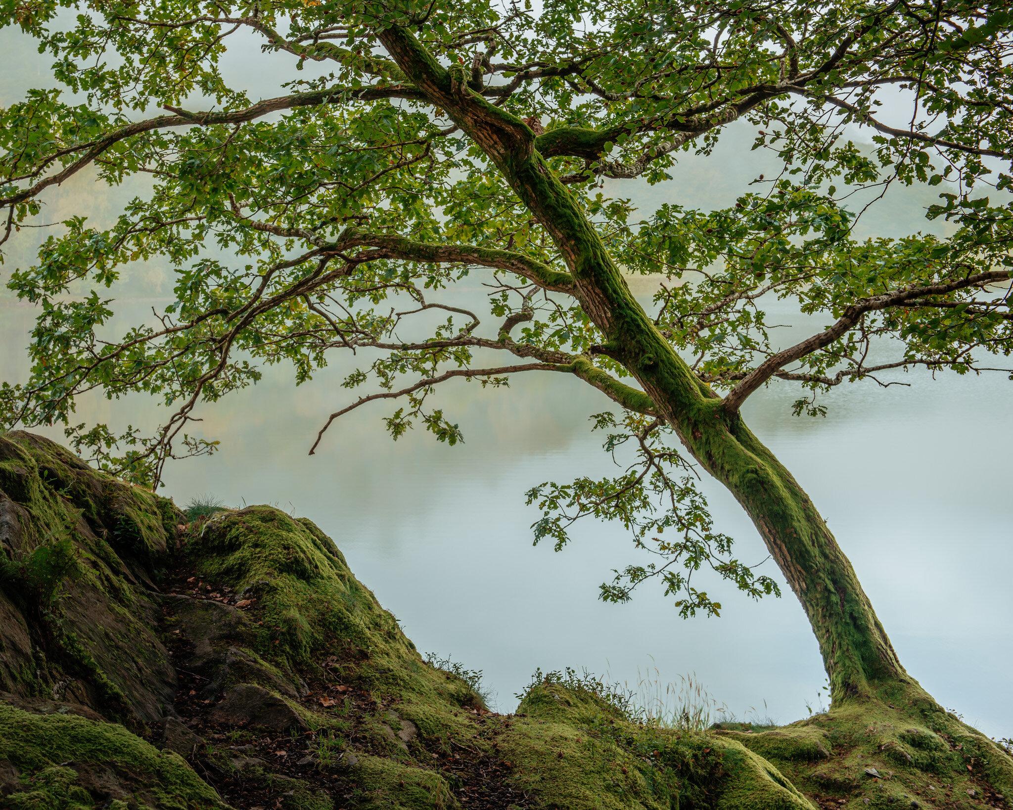 Penny Rock Woods, Grasmere