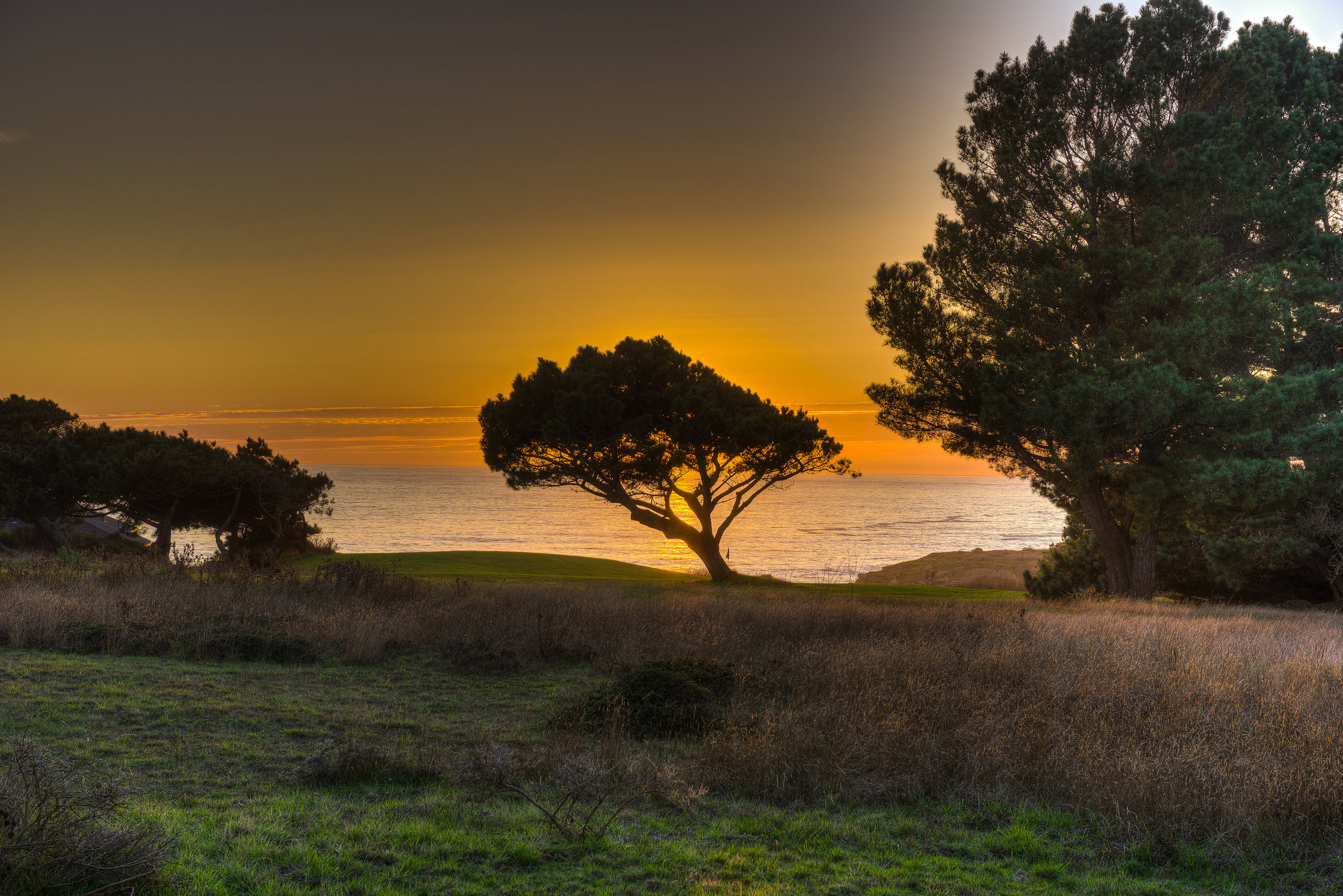 sunset and the tree.jpg