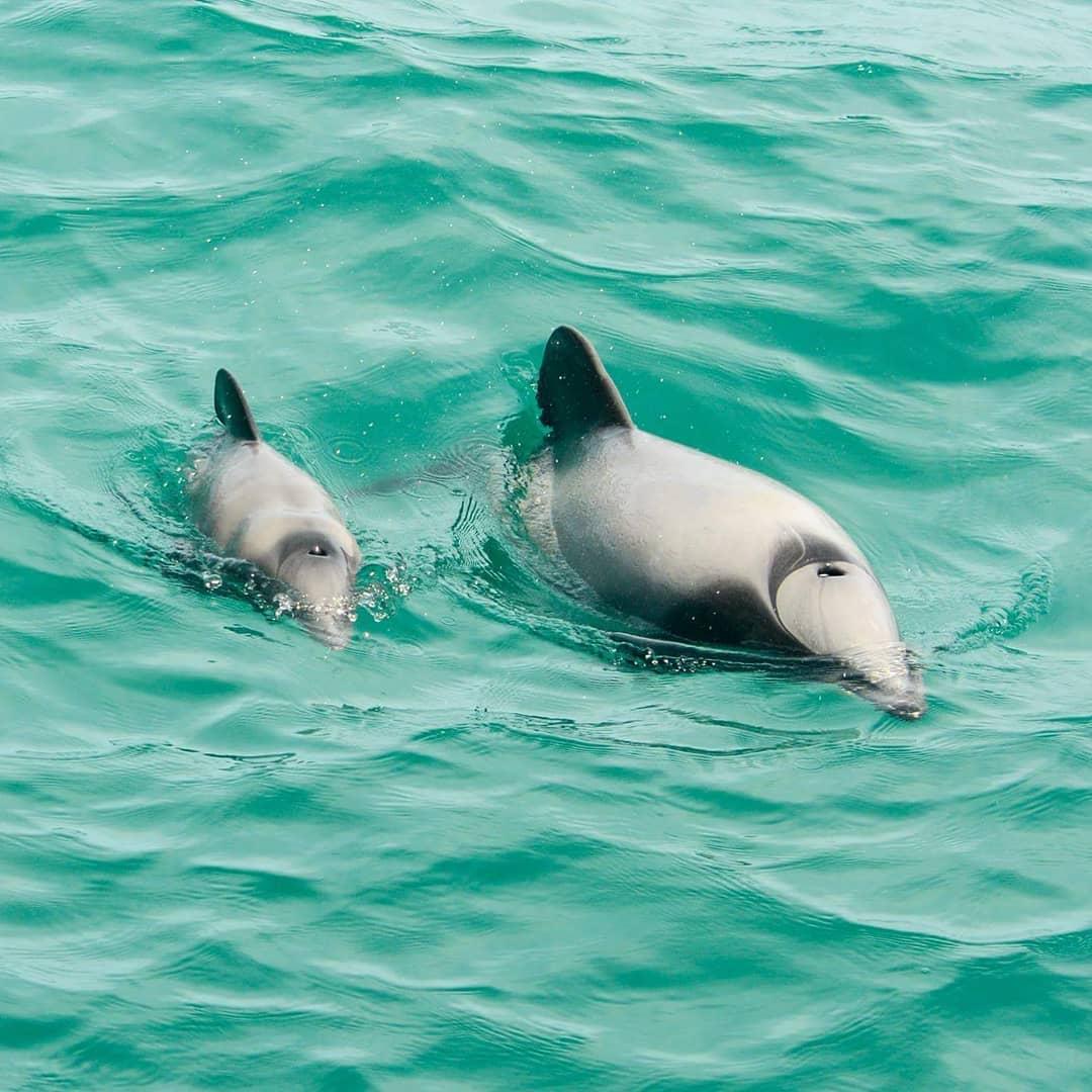 Dolphins Akaroa Glamping