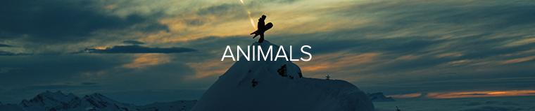 Animals..